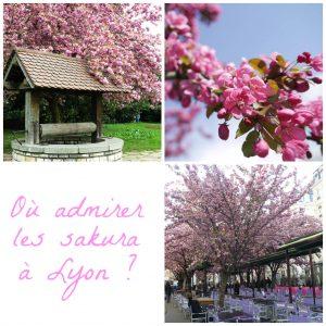 collage-sakura-lyon