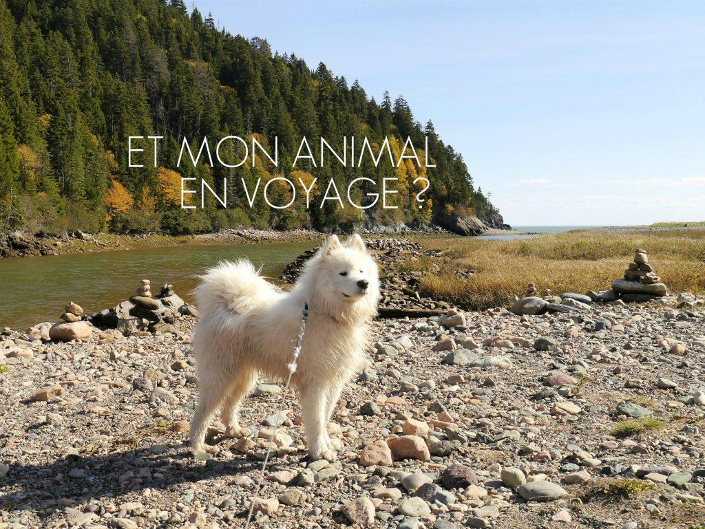 titre animal voyage