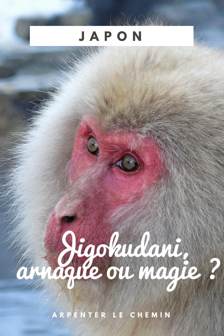 jigokudani yaen-joen japon hiver macaques des neiges blog voyage roadtrip arpenter le chemin