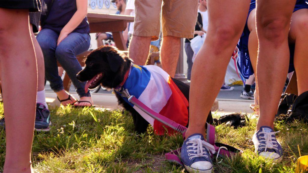 Tintamarre Moncton chien