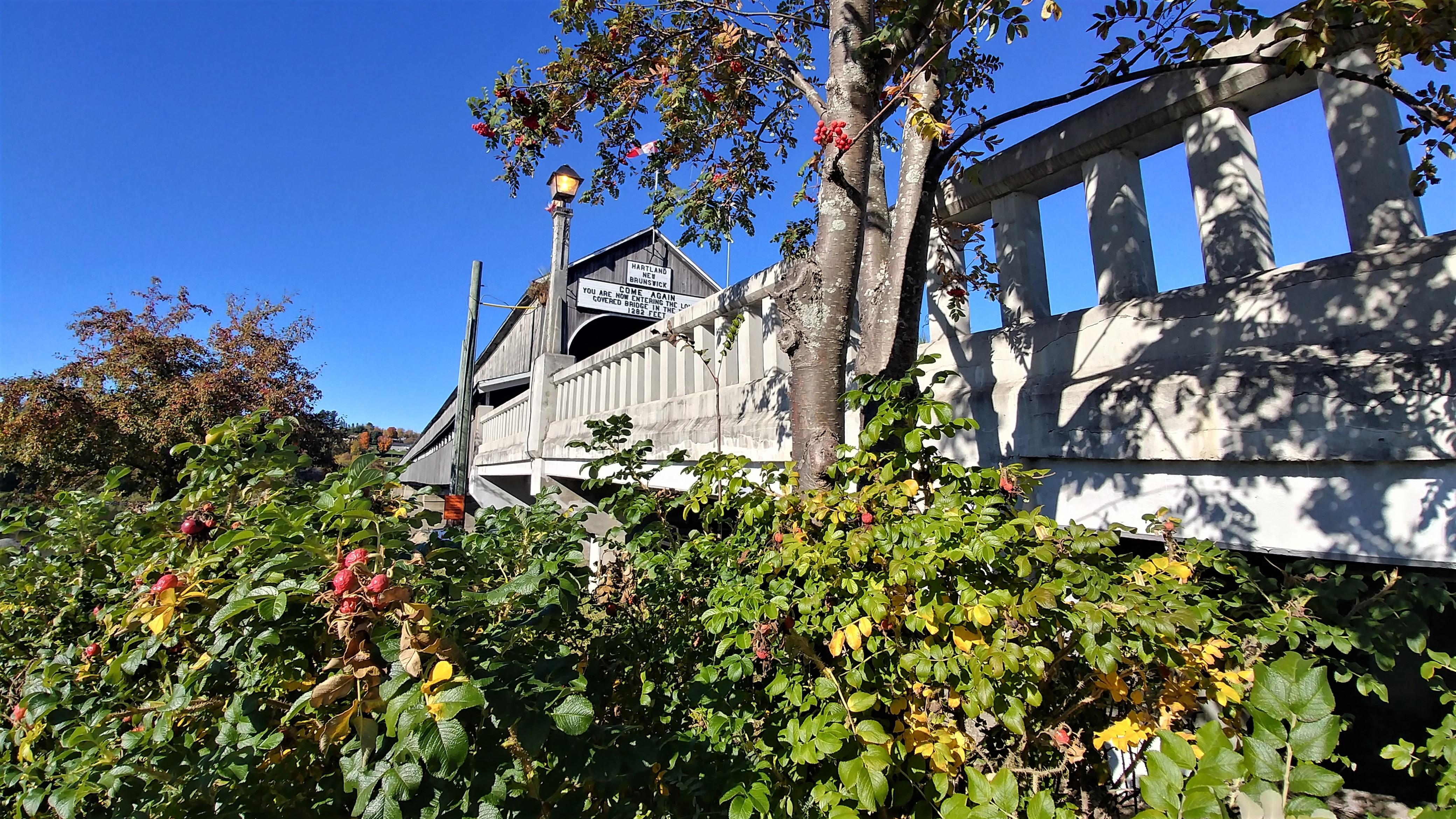 pont couvert hartland nouveau-brunswick canada road-trip automne