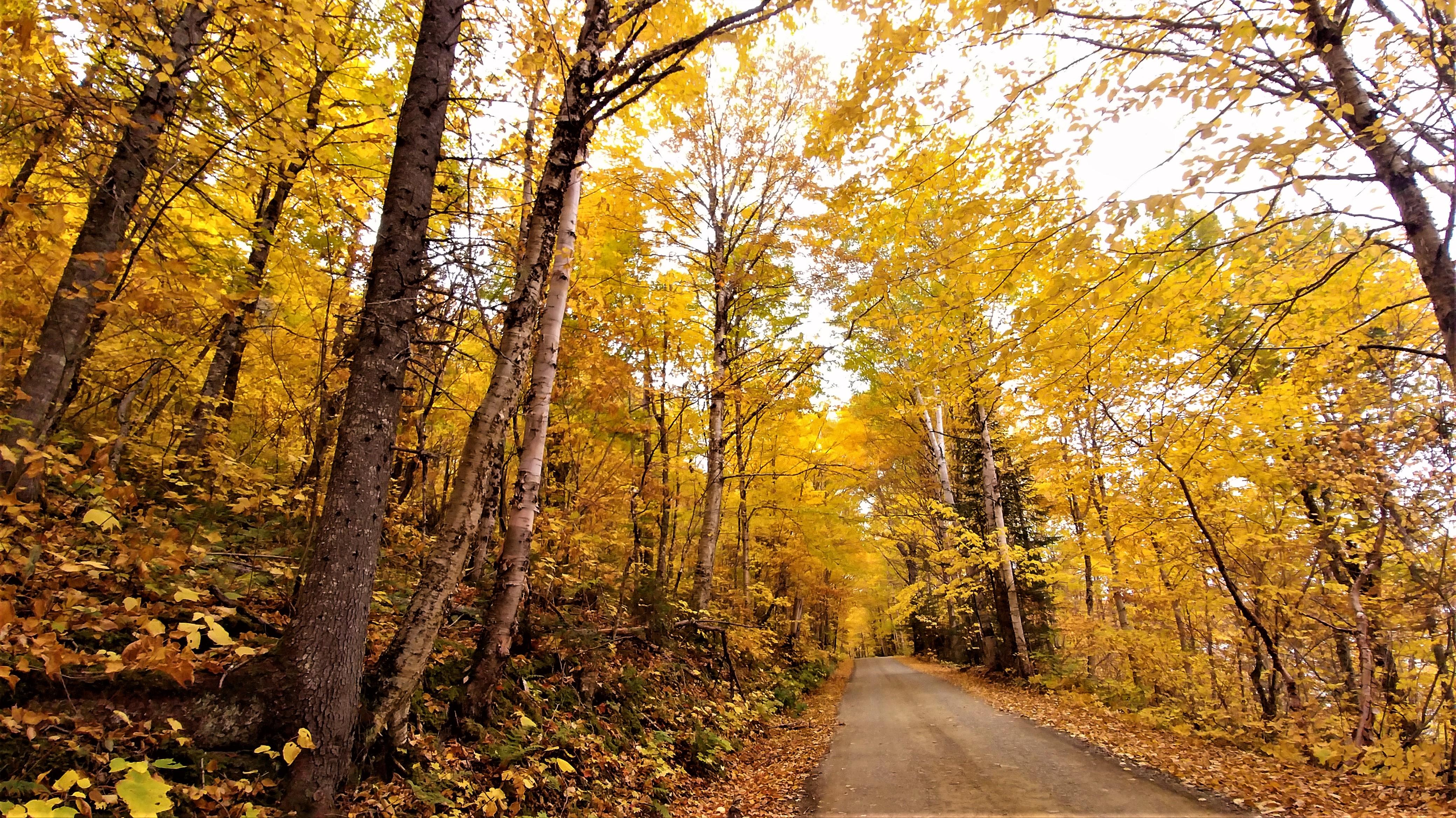 route Mont Carleton Nouveau-Brunswick Canada Acadie road-trip automne blog voyage road-trip arpenter le chemin
