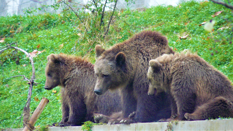 berne ours aar visiter