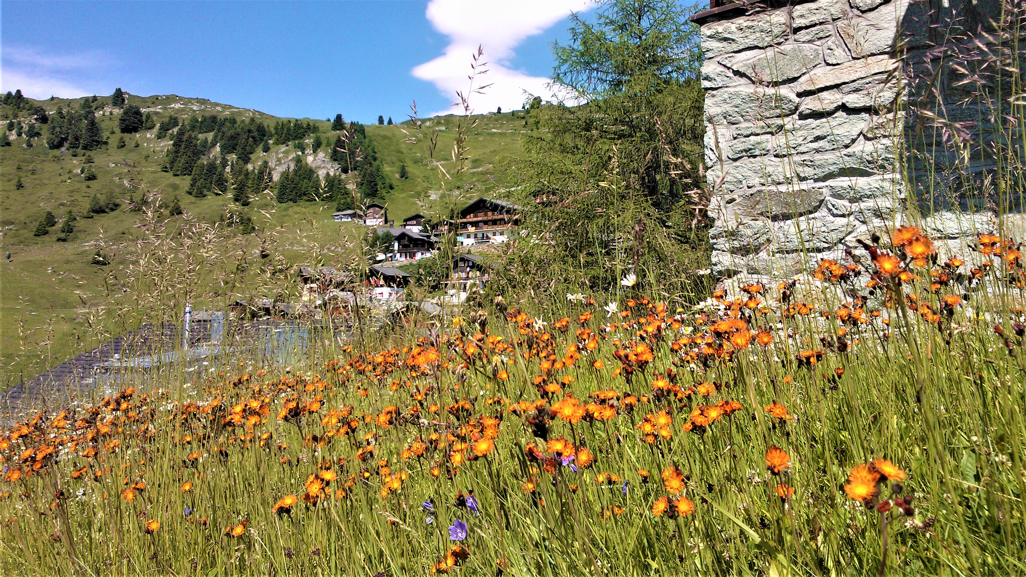 suisse visiter glacier aletsch valais blog voyage europe arpenter le chemin