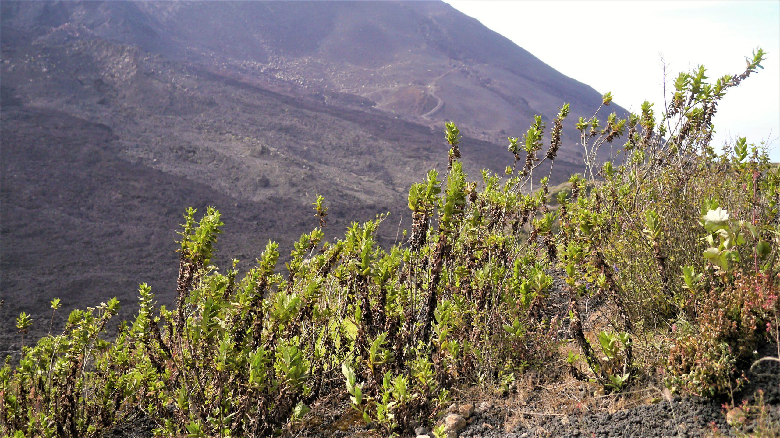 Guatemala volcan Pacaya infos pratiques blog voyage arpenter le chemin