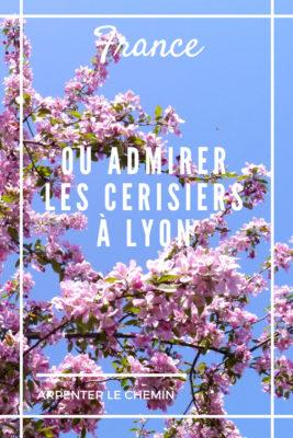 cerisiers sakura ou aller lyon blog voyage france visite printemps arpenter le chemin
