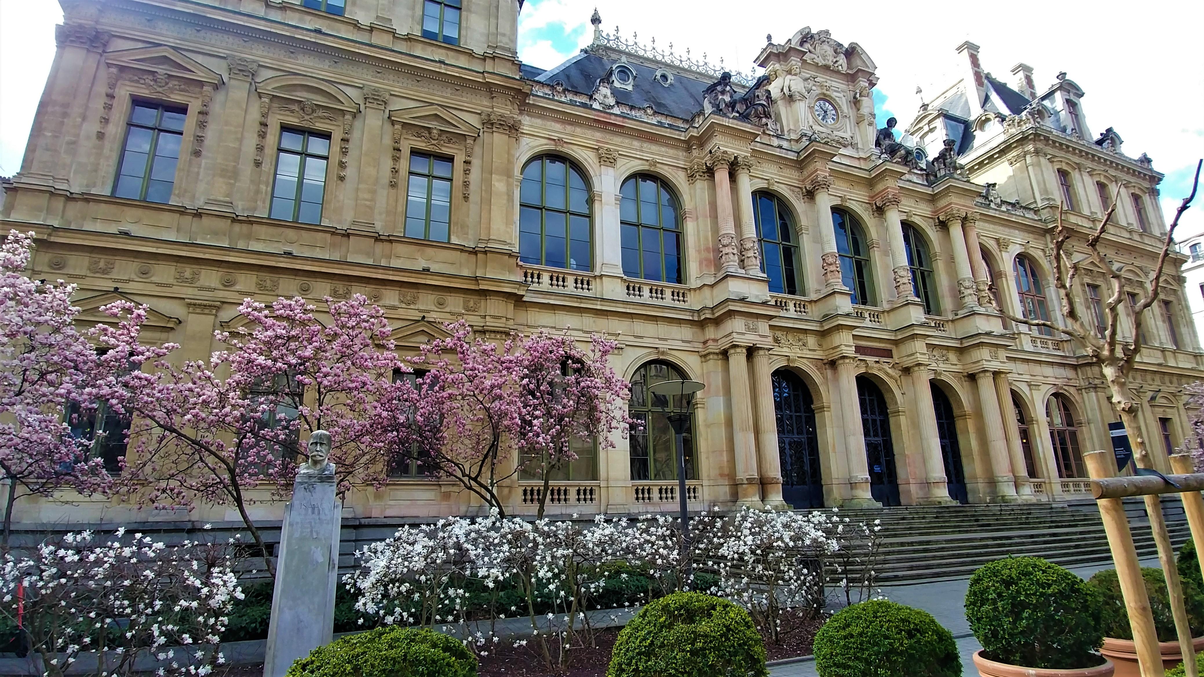 place bourse lyon magnolias fleurs rue neuve rue gentil lyon 2 escapade blog voyage europe arpenter le chemin