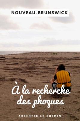 phoques kouchibouguac nouveau-brunswick canot voyageur blog voyage canada arpenter le chemin
