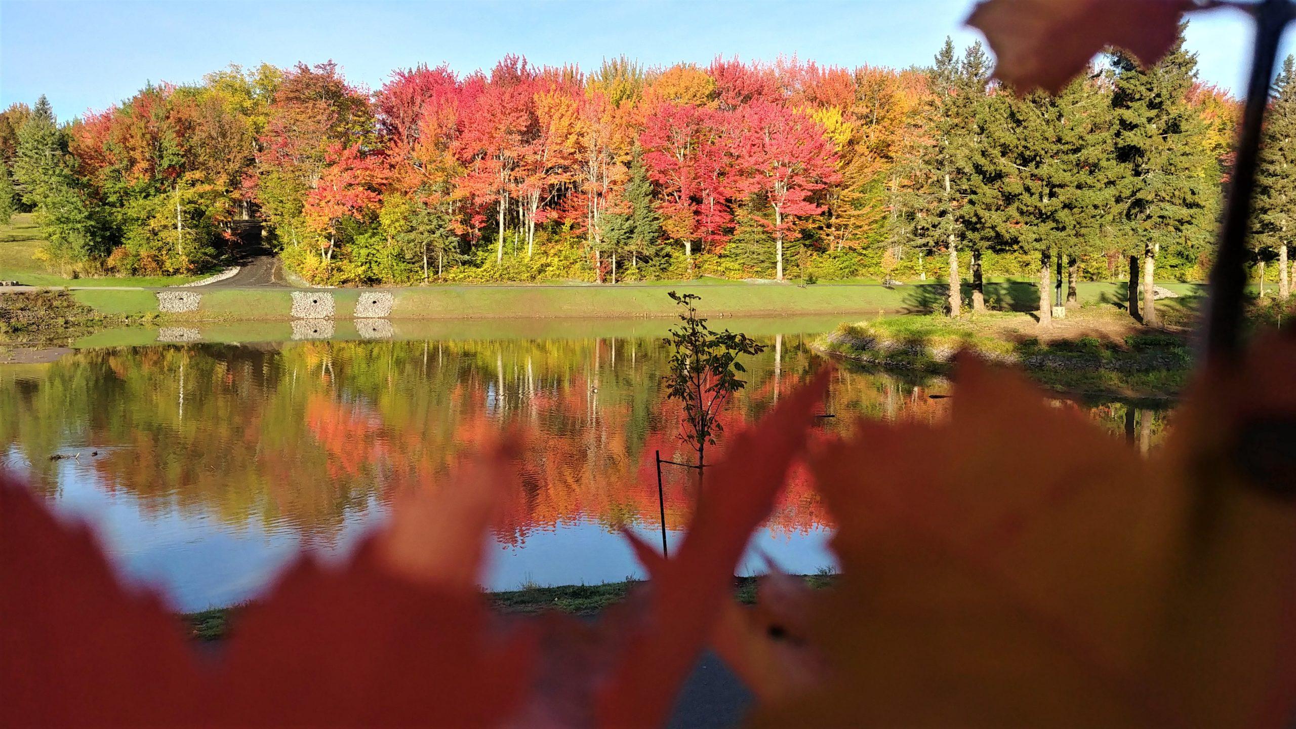 Où voir feuilles automne Moncton Nouveau-brunswick