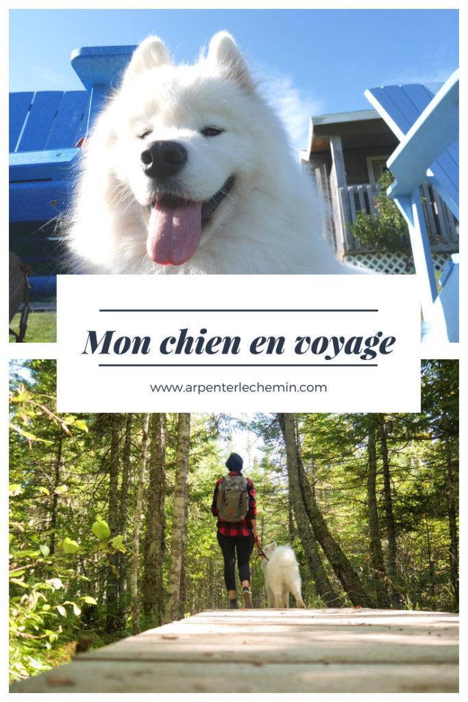 chien blog voyage arpenter le chemin randonnée
