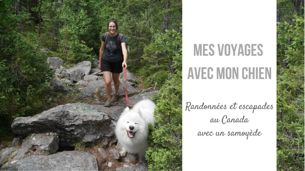chien canada randonnee van blog voyage arpenter le chemin