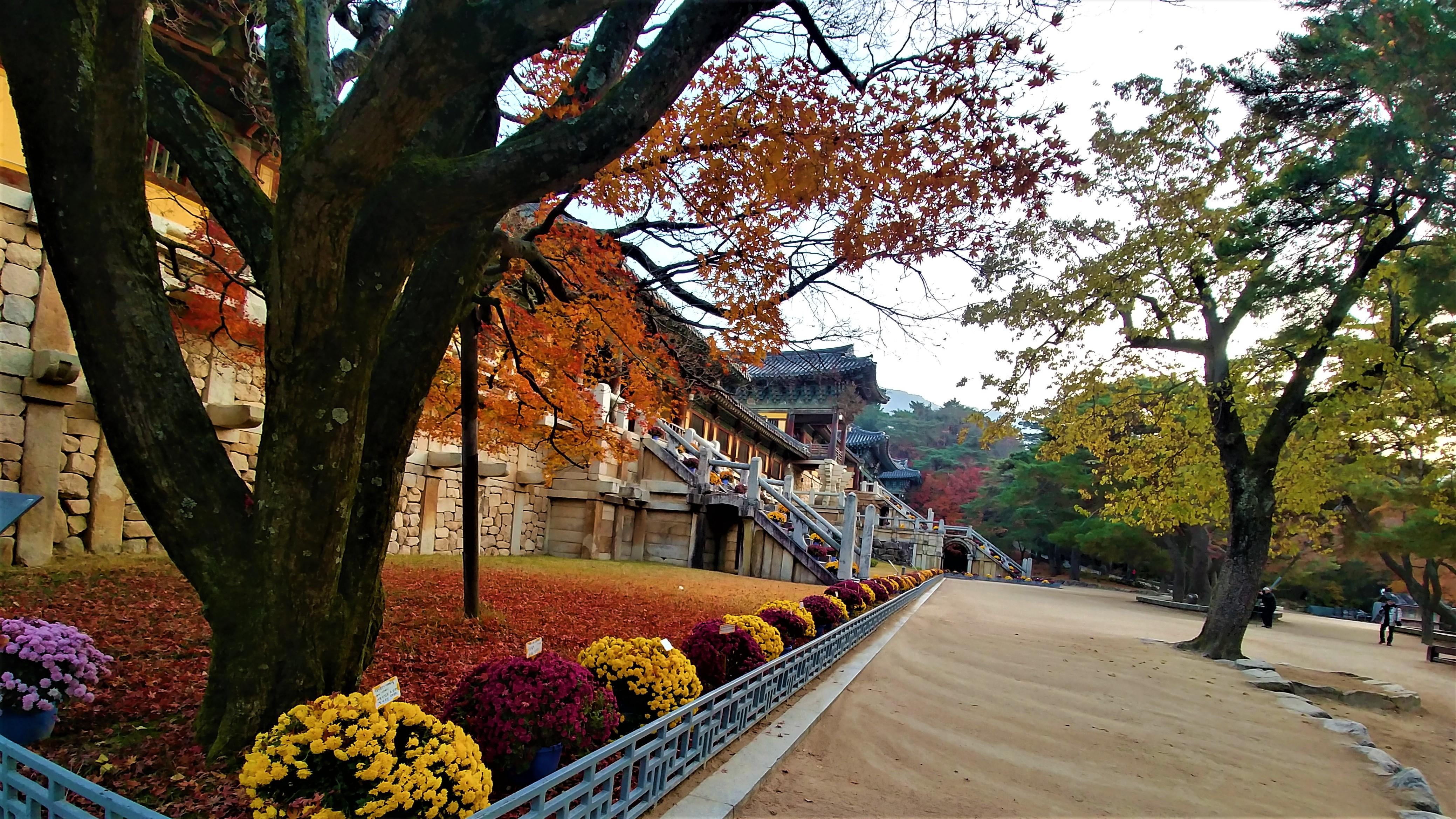 bulguksa retraite bouddhiste templestay coree du sud blog voyage arpenter le chemin