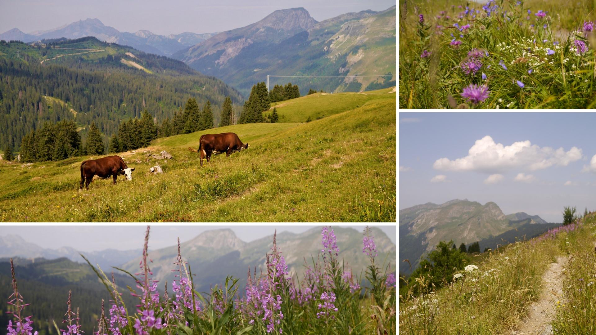 vallee abondance chatel haute-savoie blog voyage france arpenter le chemin