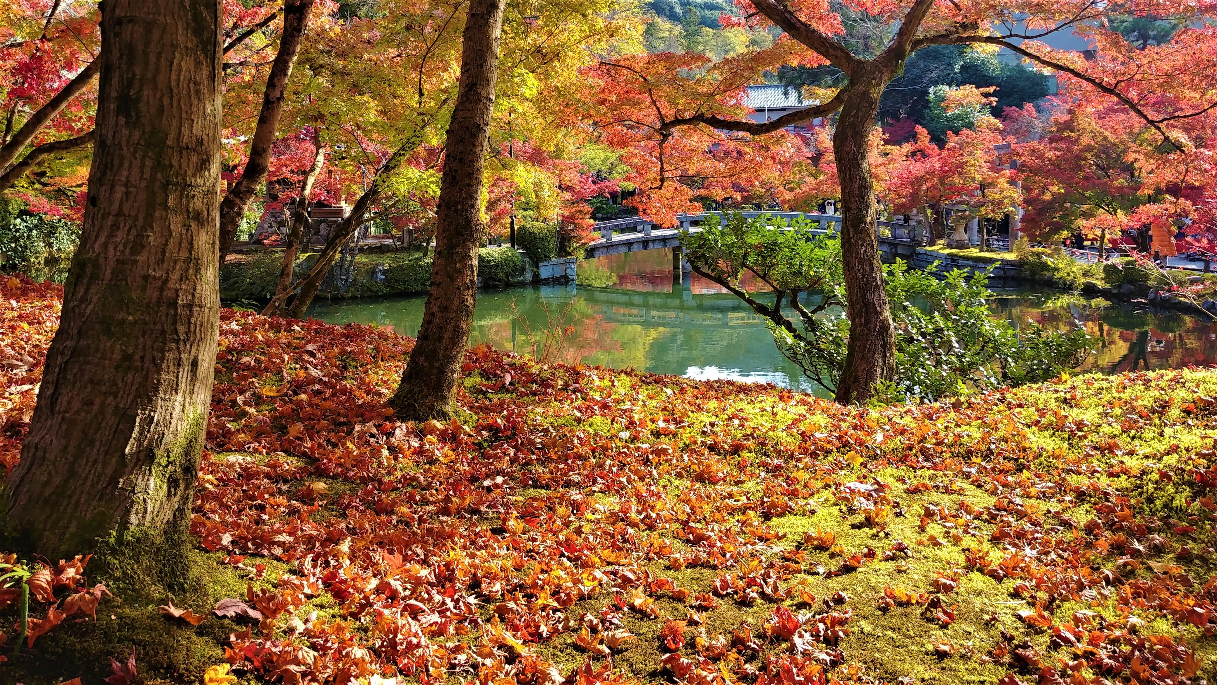 Kyoto temple Eikando automne Japon blog voyage asie arpenter le chemin