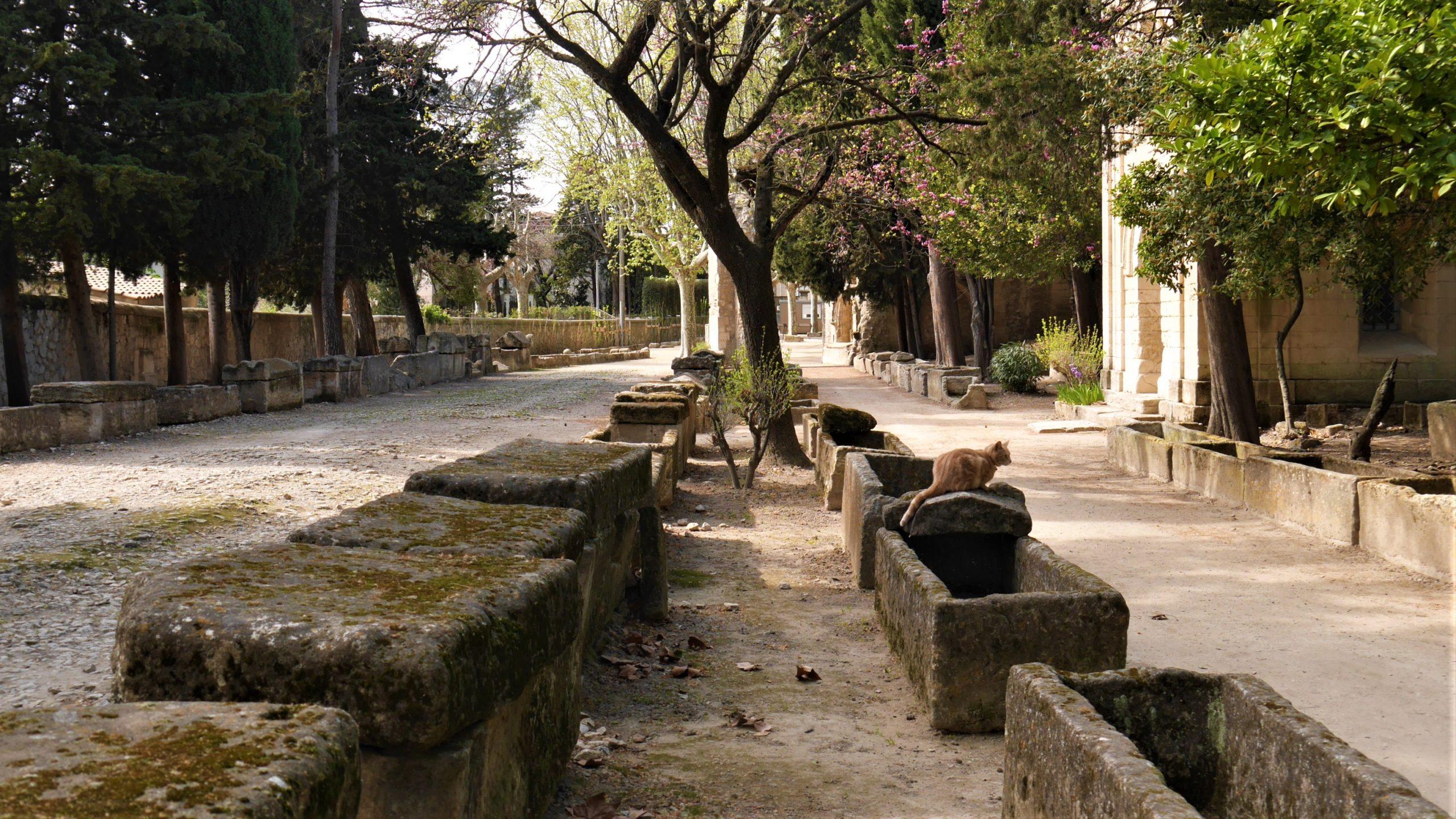 Arles Alyscamps itineraire visite centre-ville blog voyage france arpenter le chemin