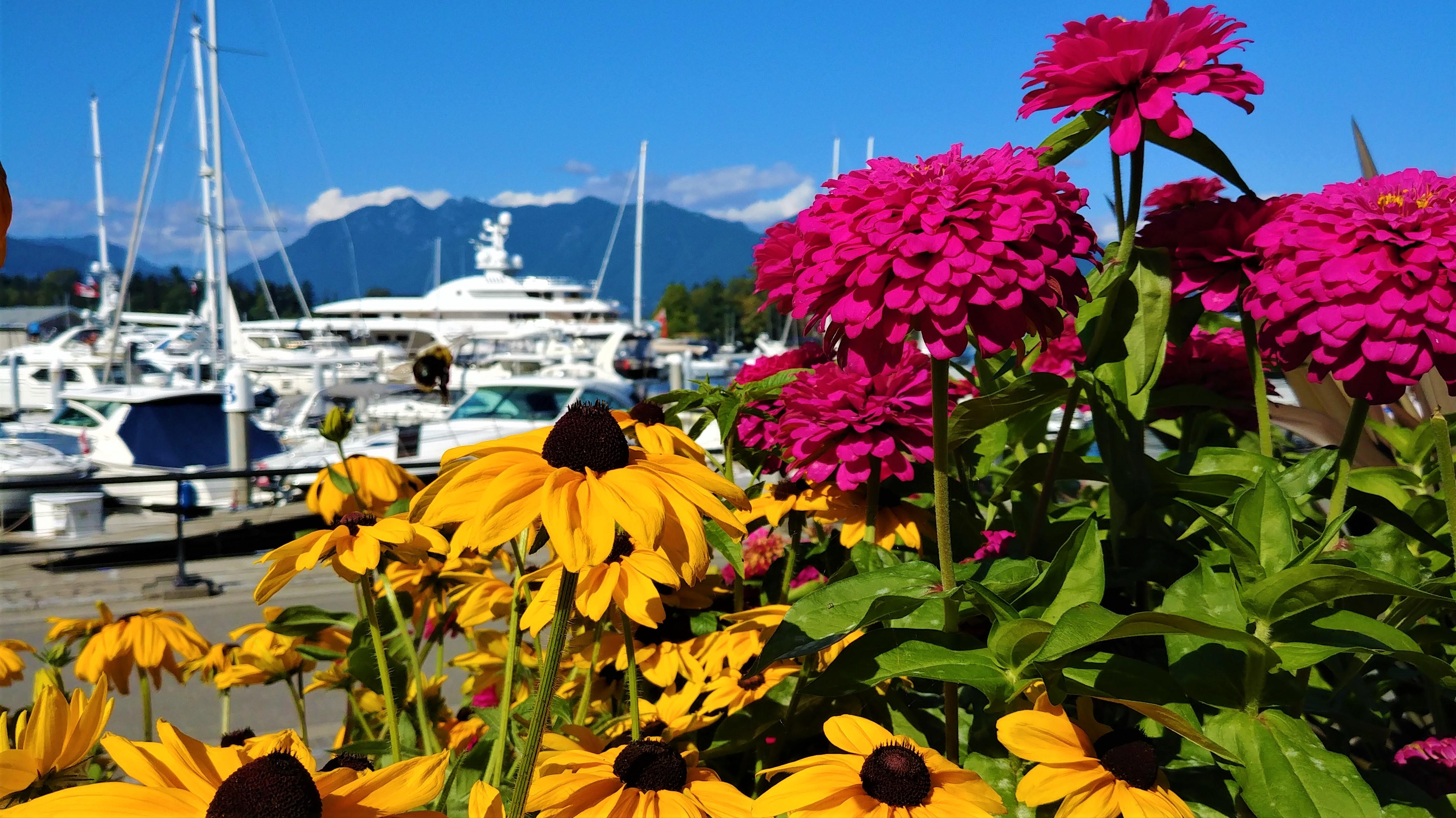 Vancouver Coal Harbour que voir blog voyage canada arpenter le chemin