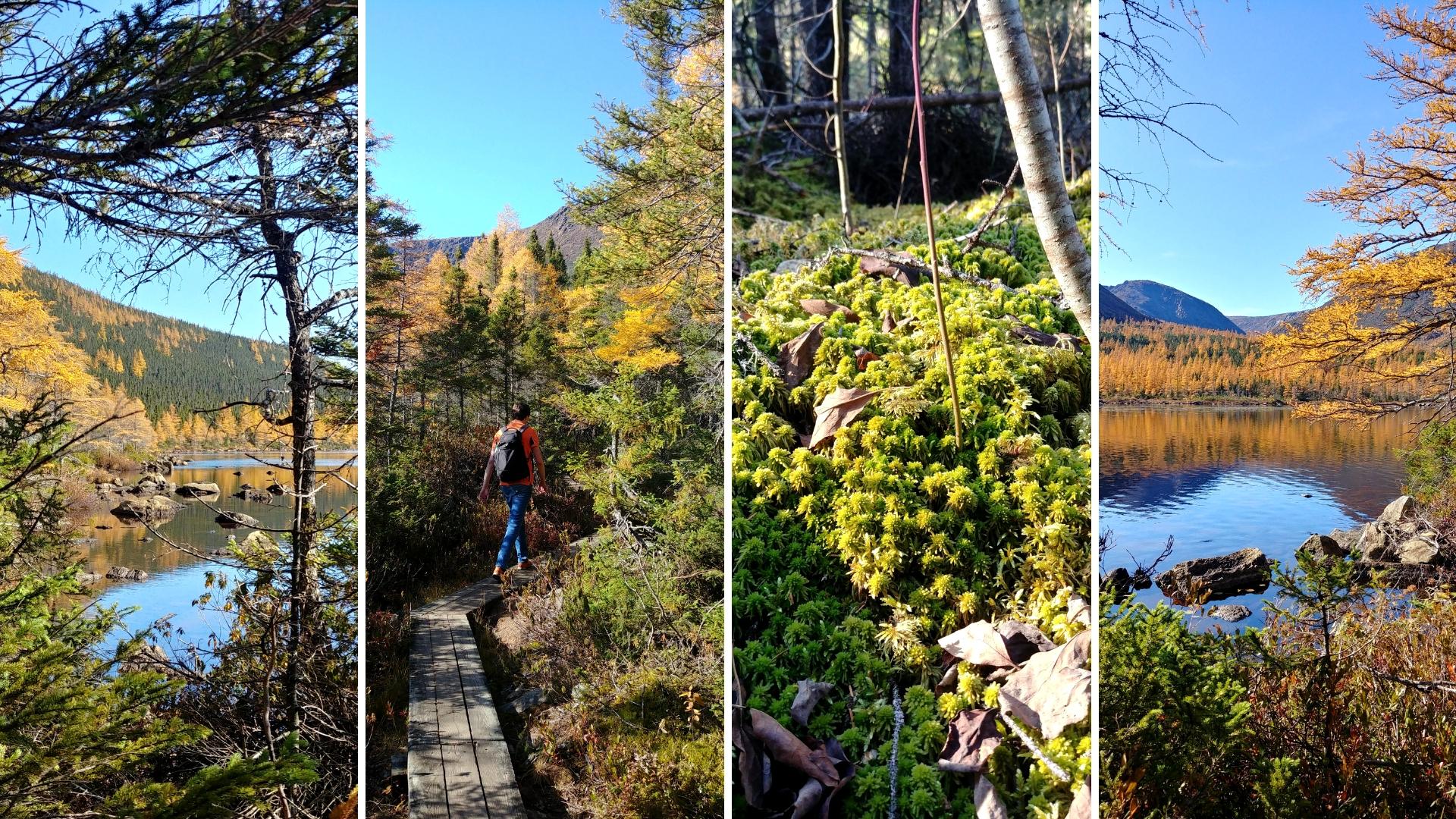 abri serpentine parc national gaspesie automne blog voyage canada road-trip arpenter le chemin