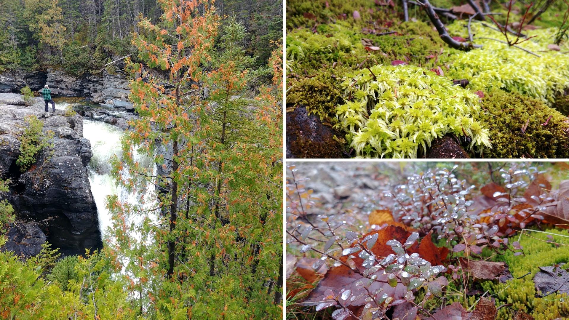 chutes sainte-anne randonnee gaspesie automne blog voyage canada road-trip arpenter le chemin