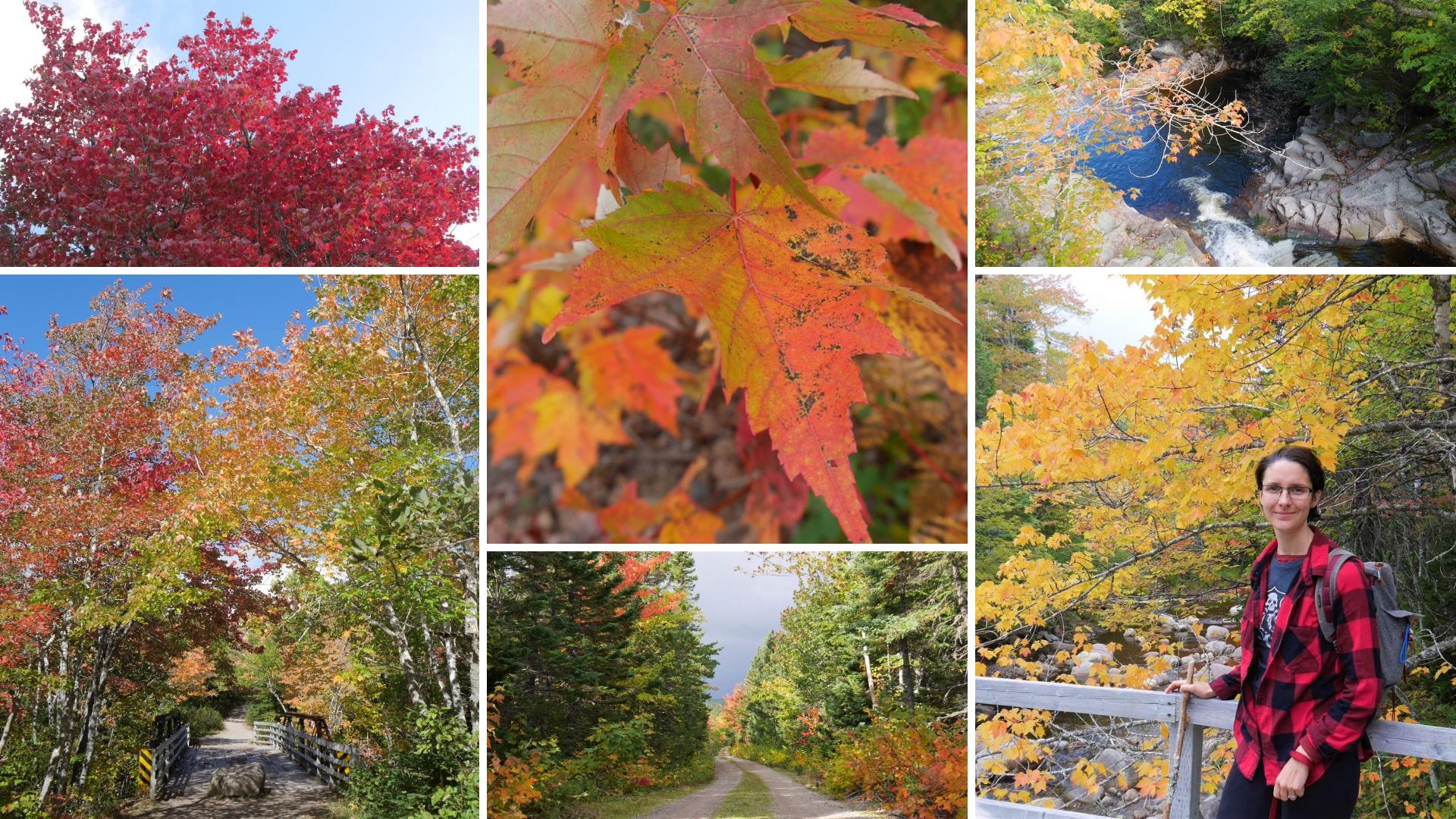couleurs automne acadie nouvelle-ecosse road-trip