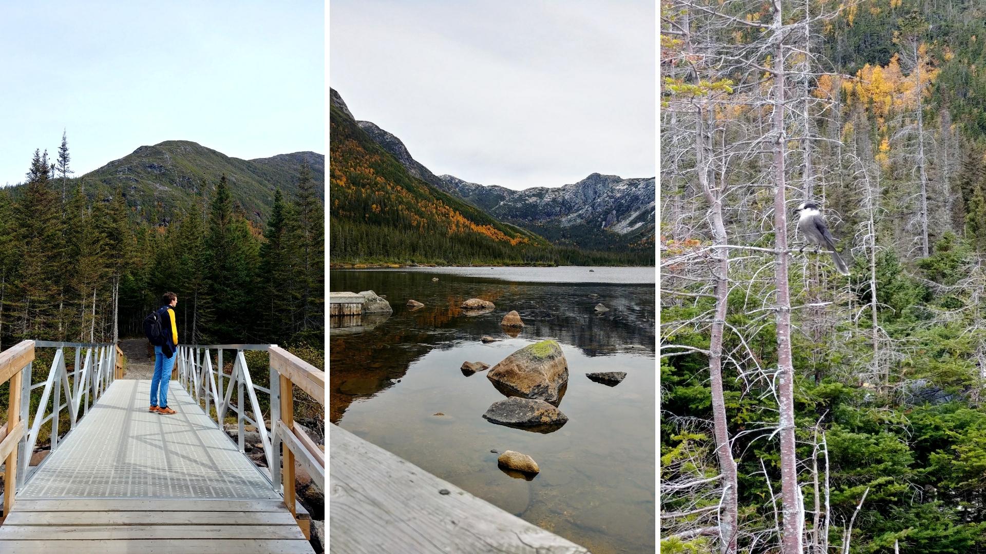 lac aux americains randonnee gaspesie automne blog voyage canada road-trip arpenter le chemin