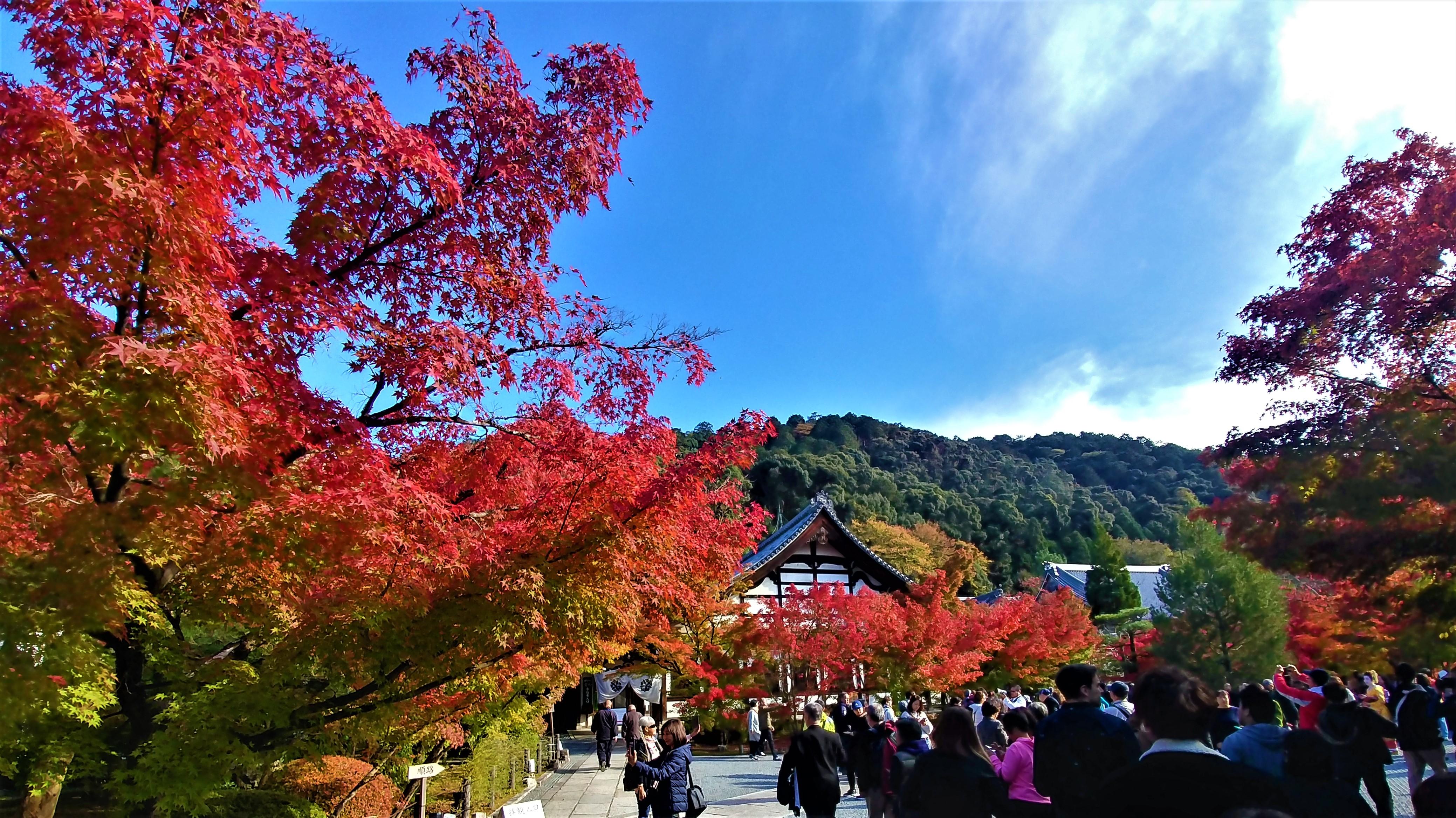 Eikando temple kyoto voir momiji japon automne blog voyage arpenter le chemin