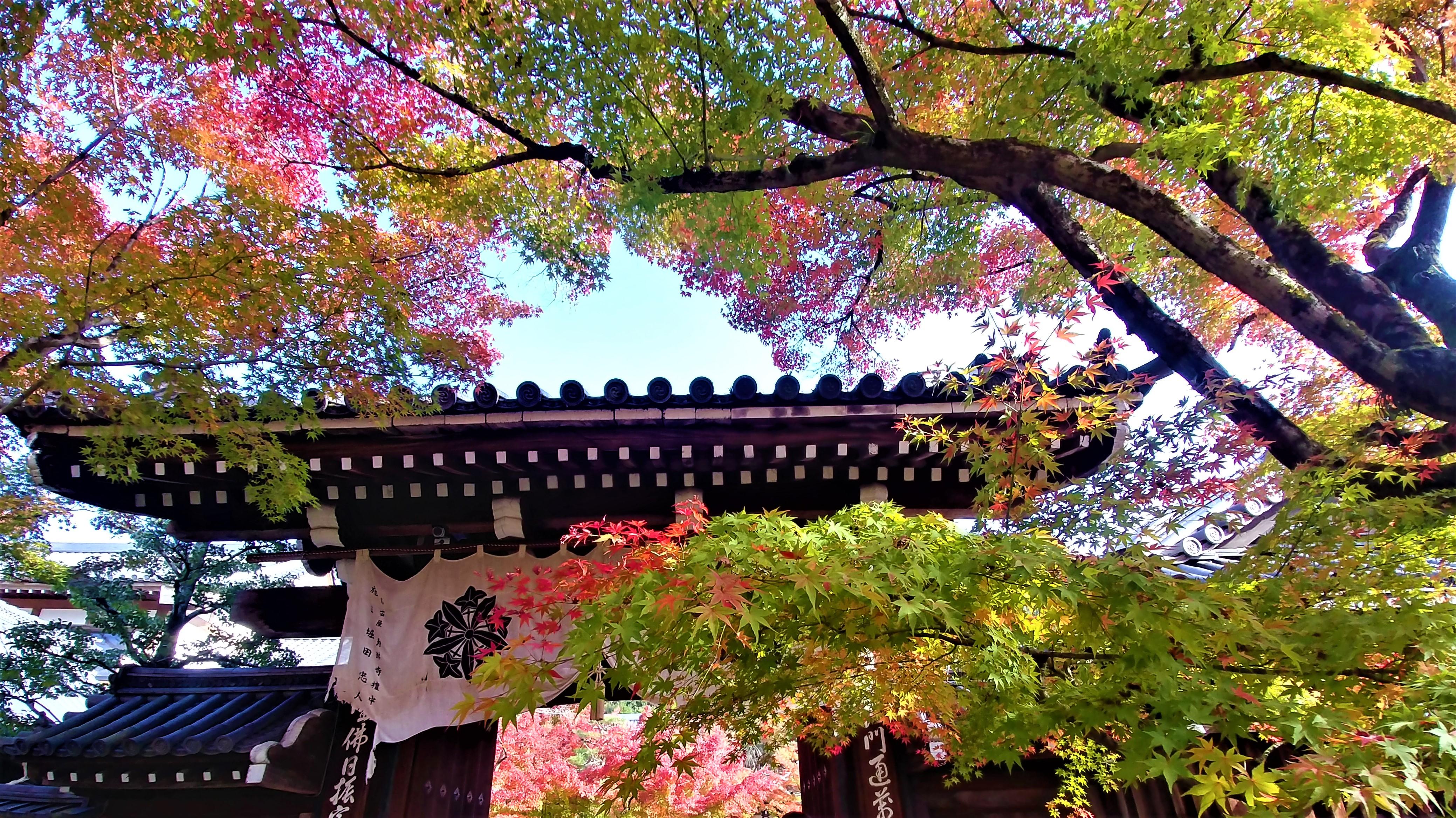 Kyoto momiji automne novembre eikando japon blog voyage arpenter le chemin