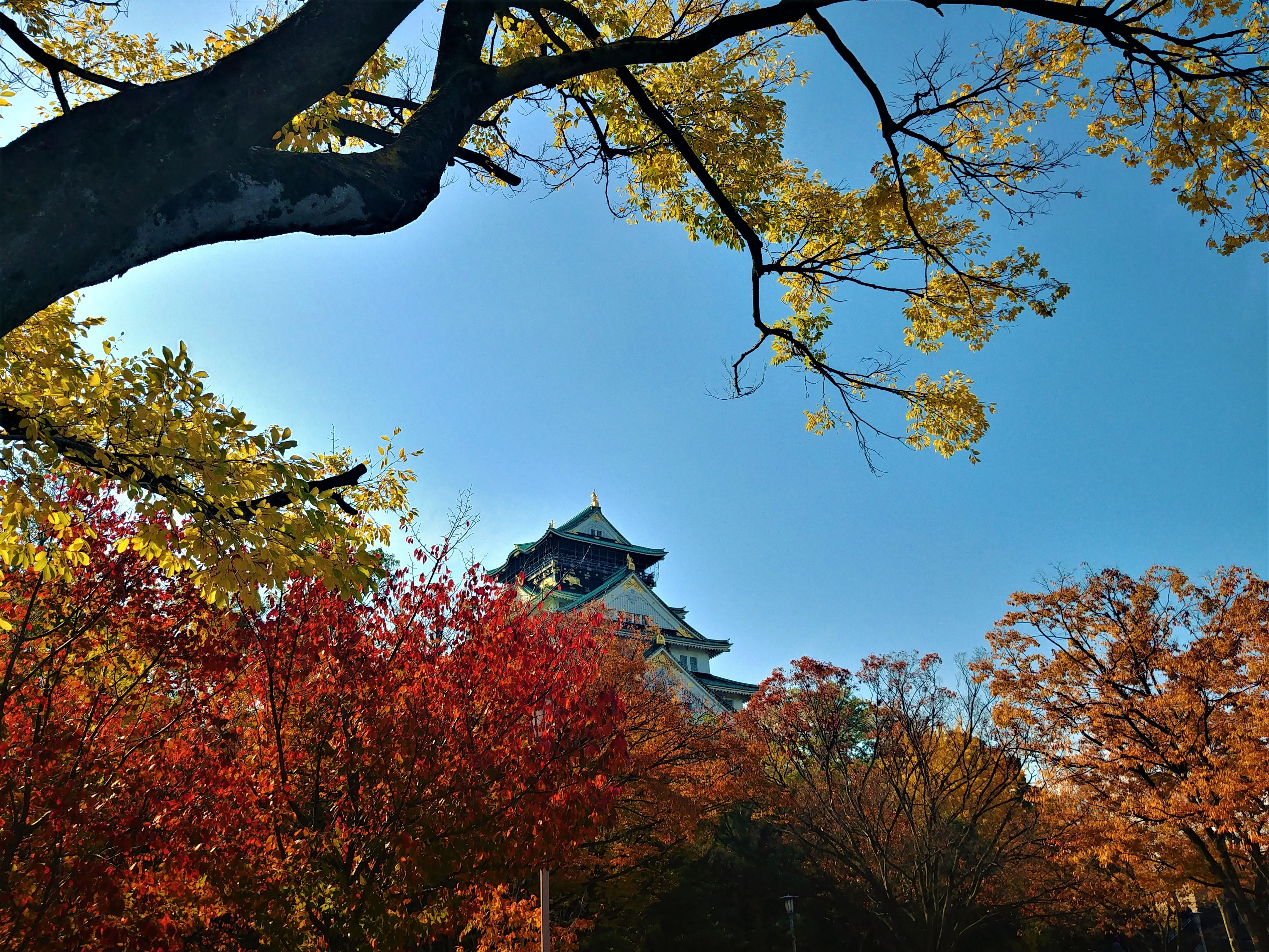 Osaka momiji automne chateau asie arpenter le chemin blog voyage