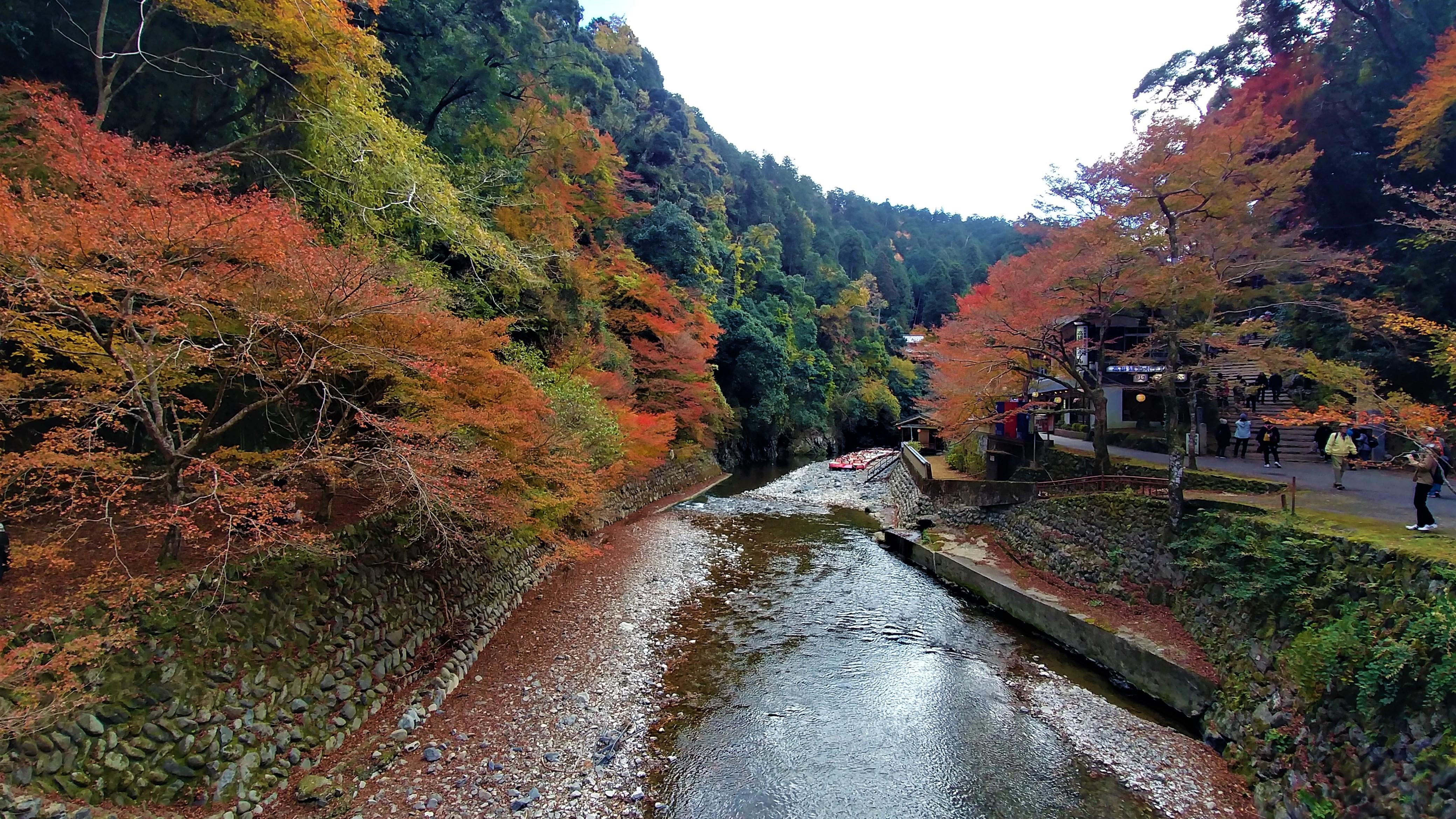 Togano voir momiji erable kyoto automne quand venir infos pratiques blog voyage japon arpenter le chemin