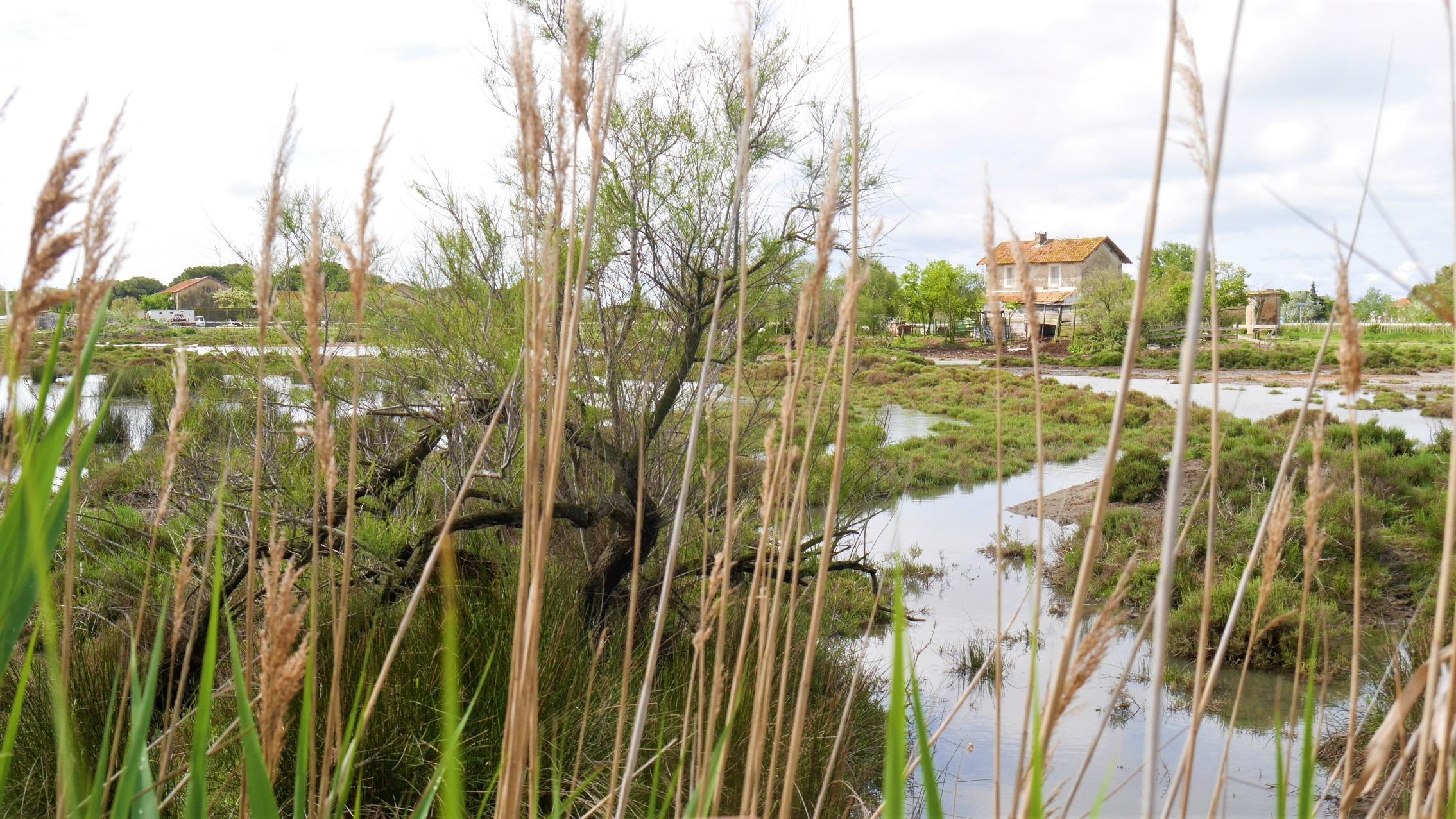 Camargue escapade réserve ornithologique pont de Gau infos pratiques blog voyage provence arpenter le chemin