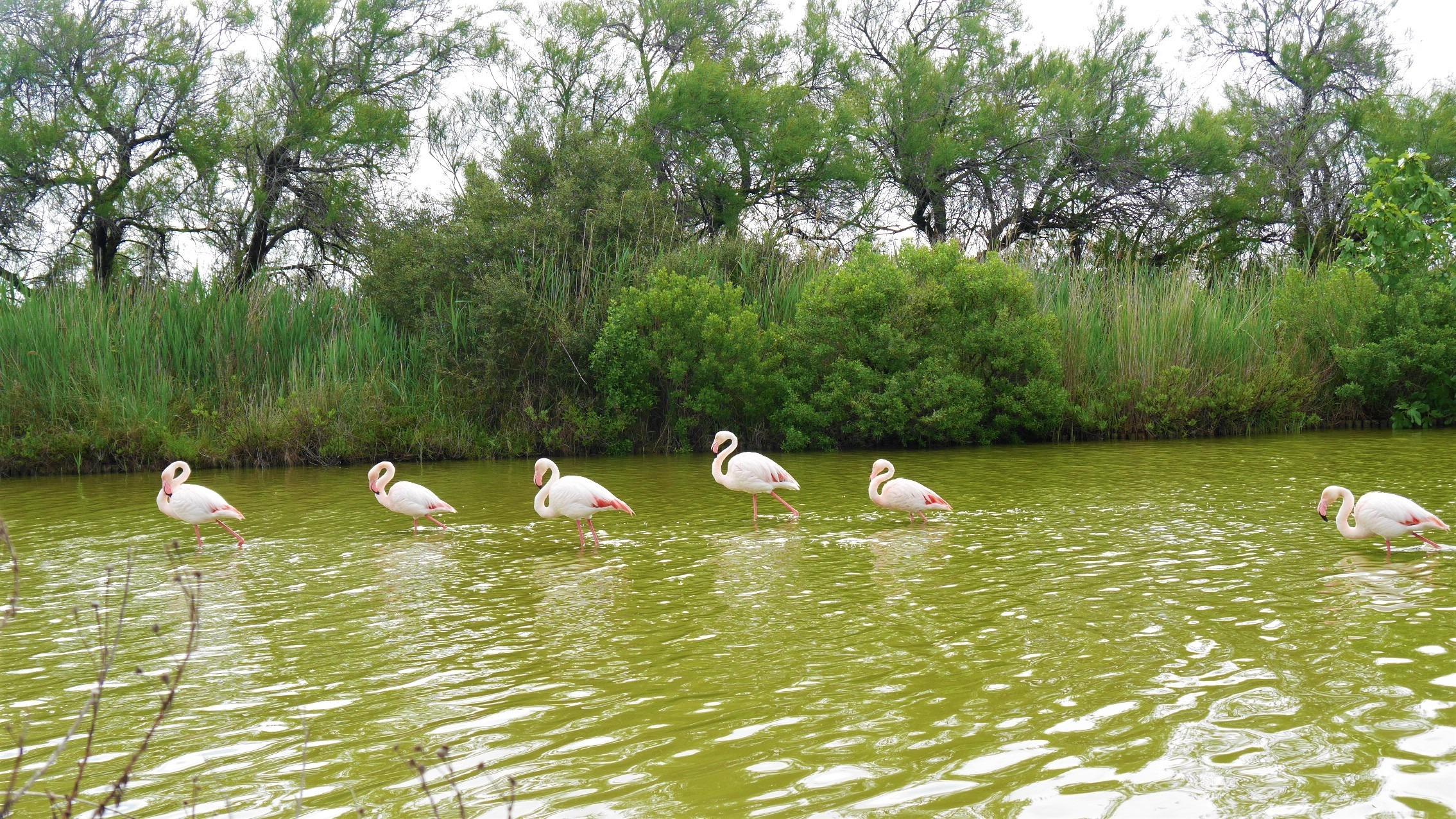 Camargue où voir flamants roses réserve ornithologique infos pratiques