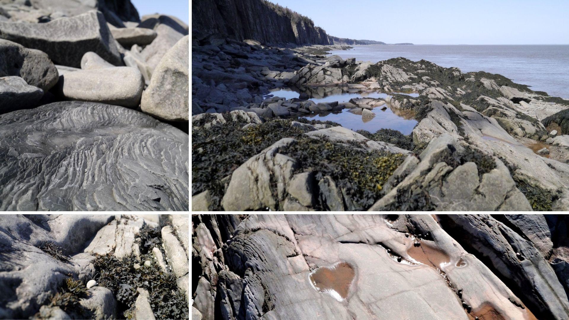 Cap Enragé Nouveau-Brunswick Canada infos pratiques