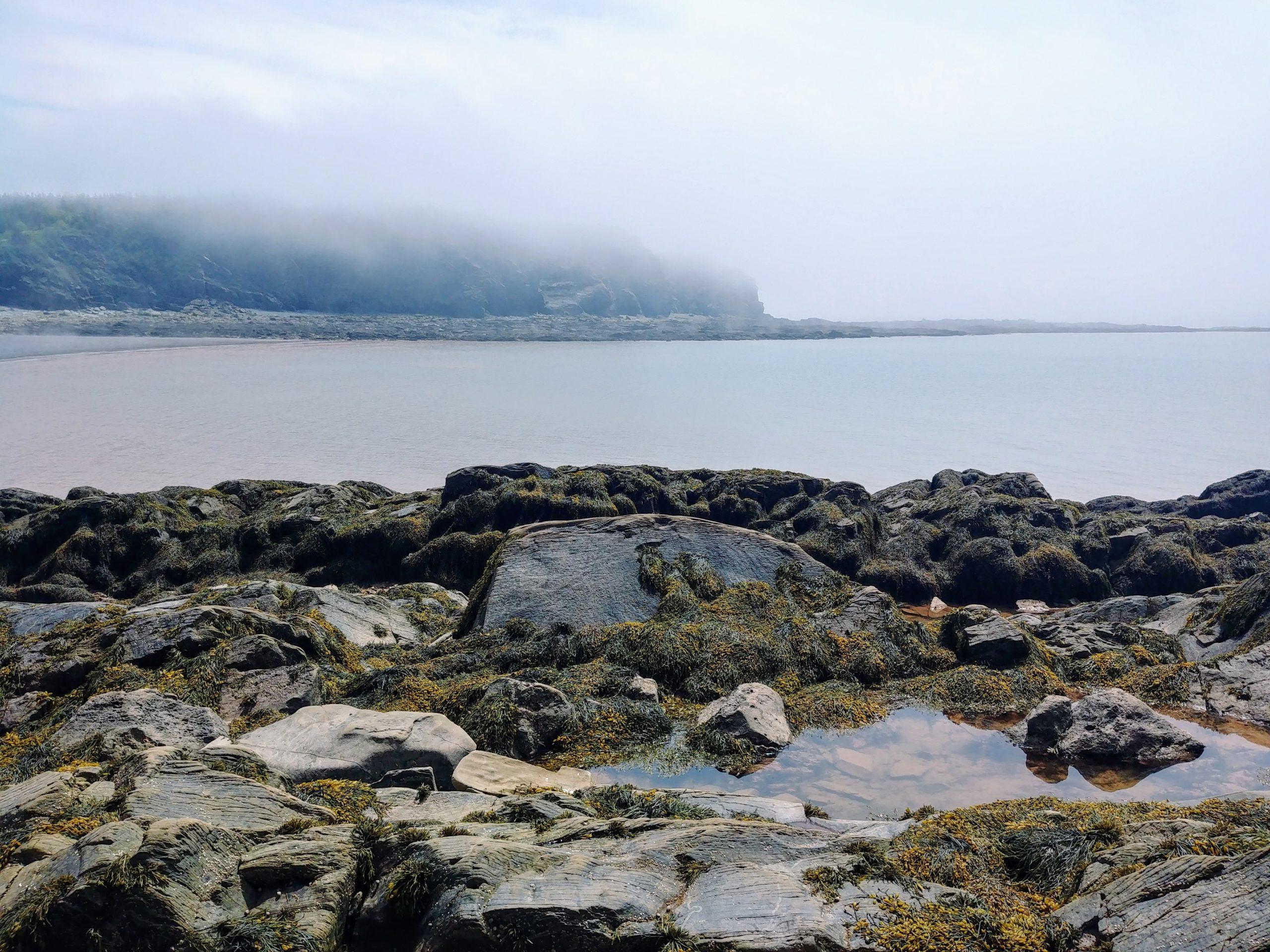 Cap Enragé que voir infos pratiques nouveau-brunswick baie de fundy blog de voyage