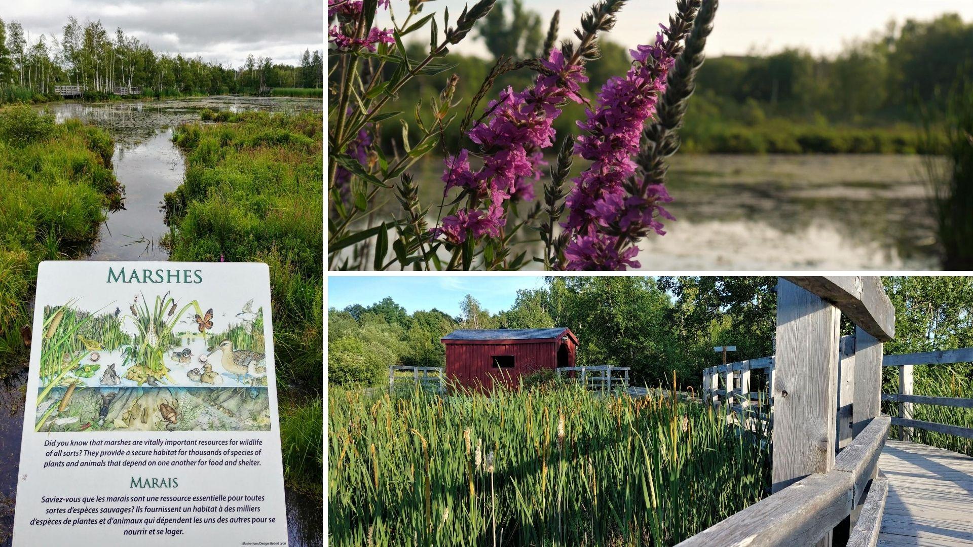 Sackville parc de la sauvagine Nouveau-Brunswick