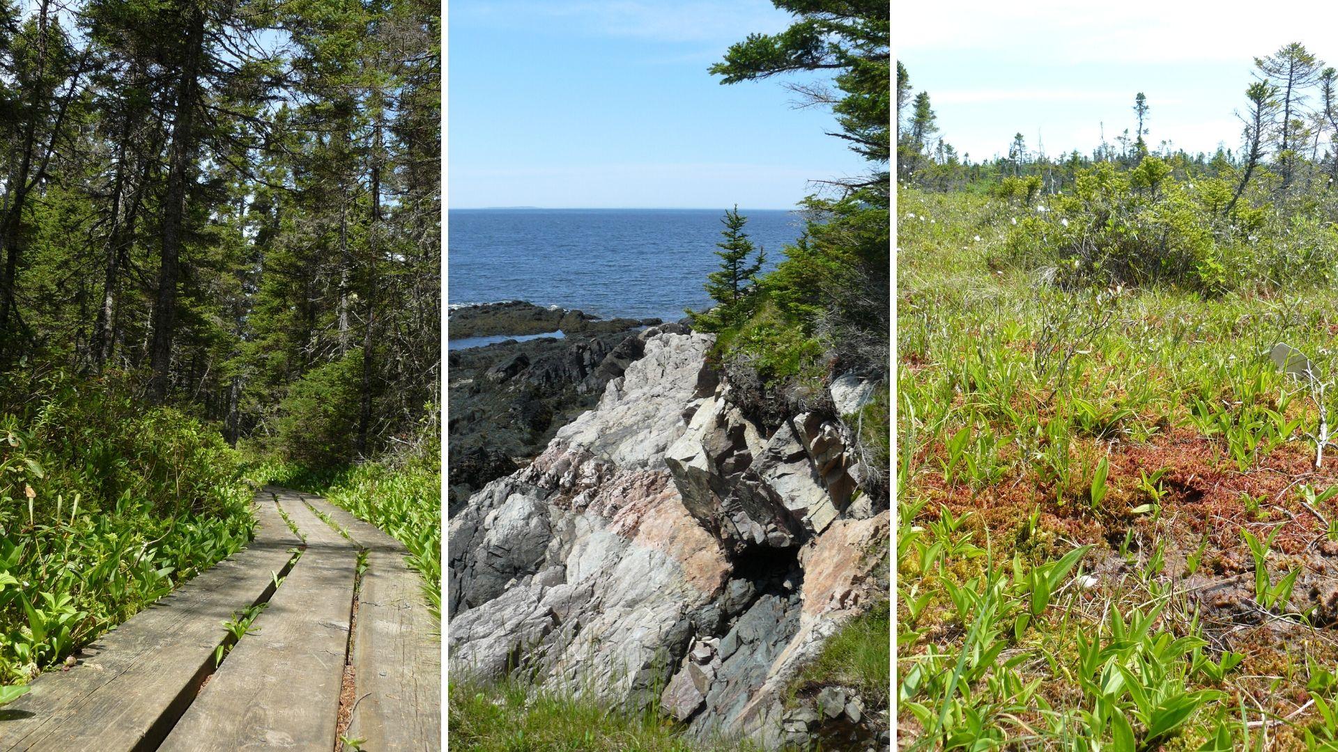 Visiter parc provincial New River Beach voyage Nouveau-Brunswick