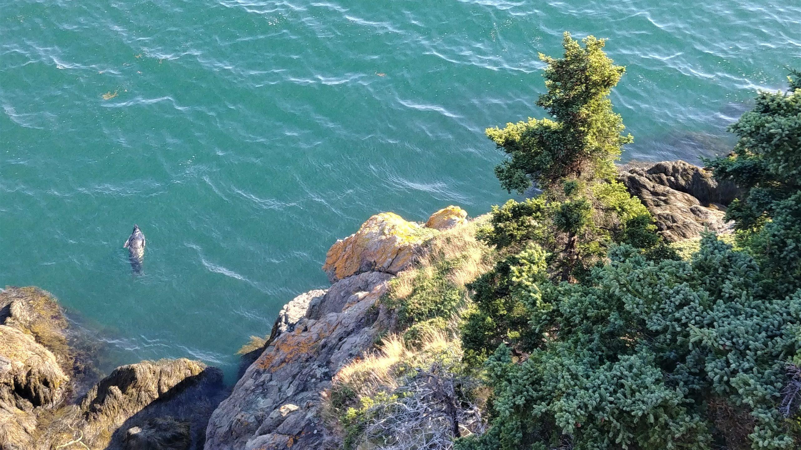 Grand Manan où voir phoques