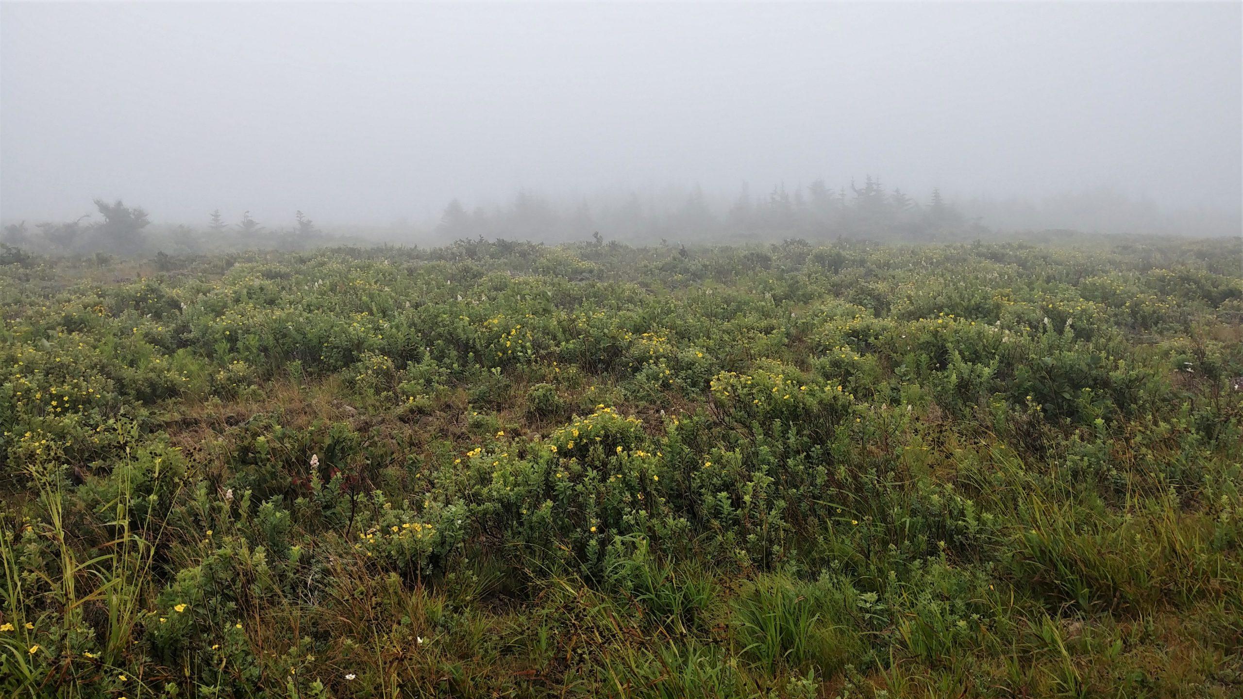 Grand Manan que faire en cas de brouillard infos pratiques blog voyage