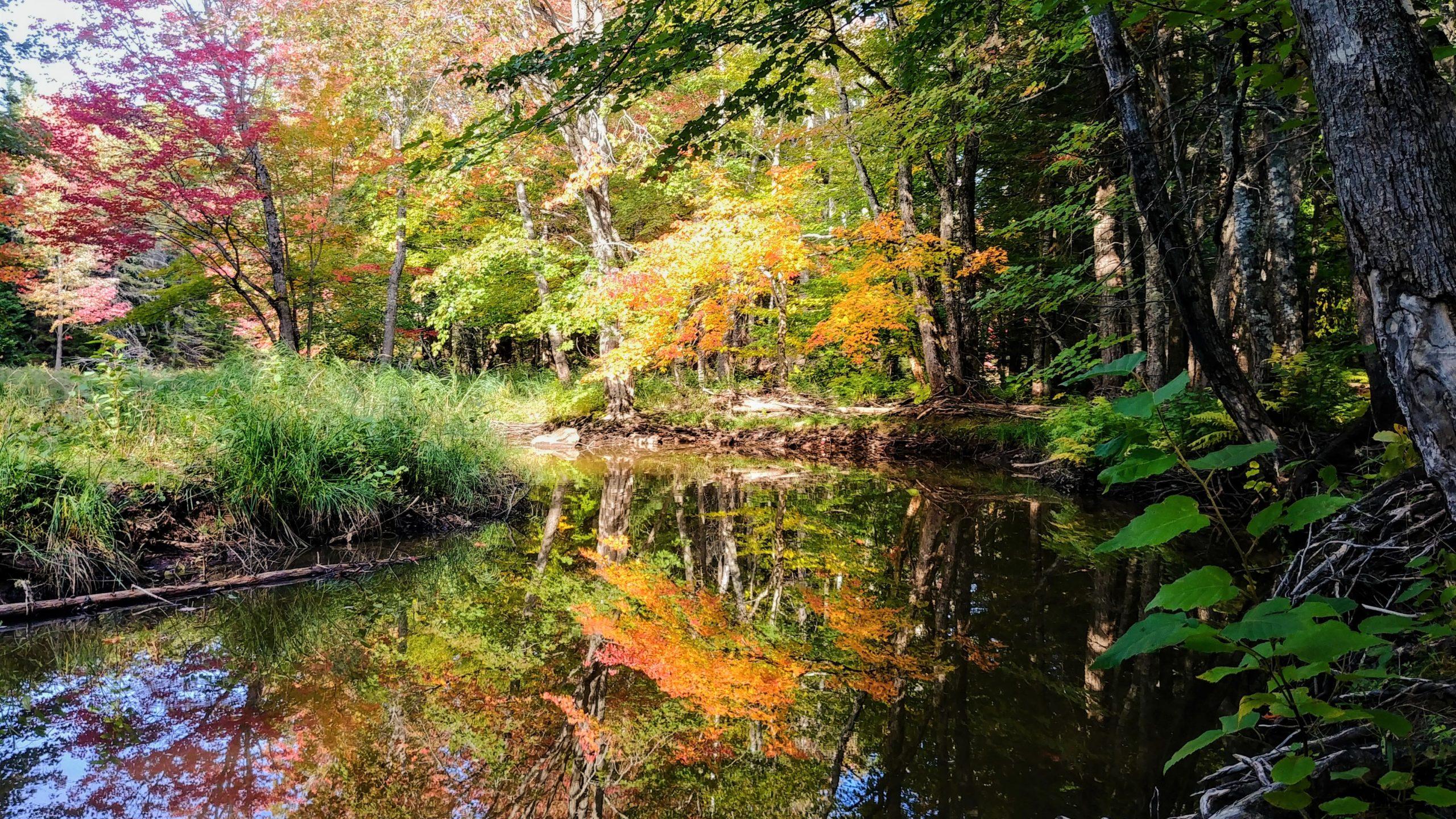 Couleurs automne Nouveau-brunswick où aller sentier Dobson riverview blog voyage arpenter le chemin