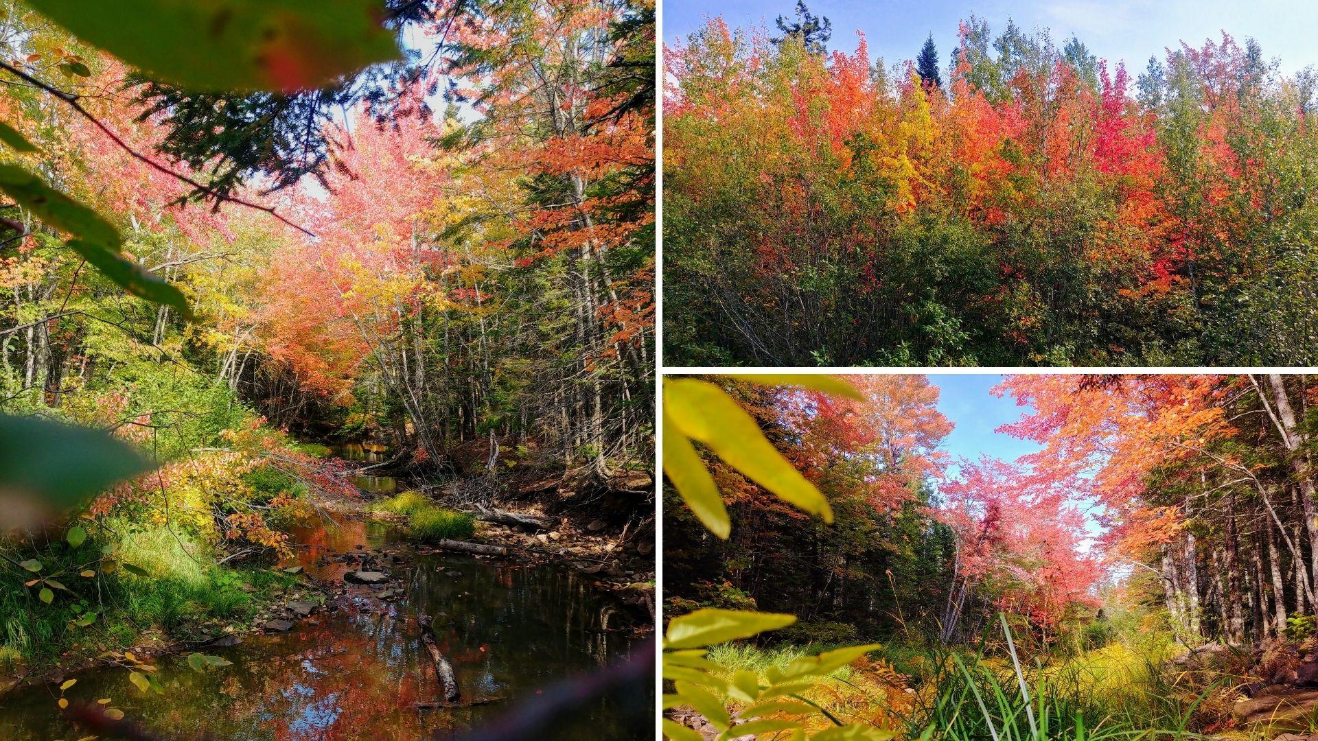 Randonnée d'automne au Nouveau-Brunswick - Sentier Dobson, Riverview (3)