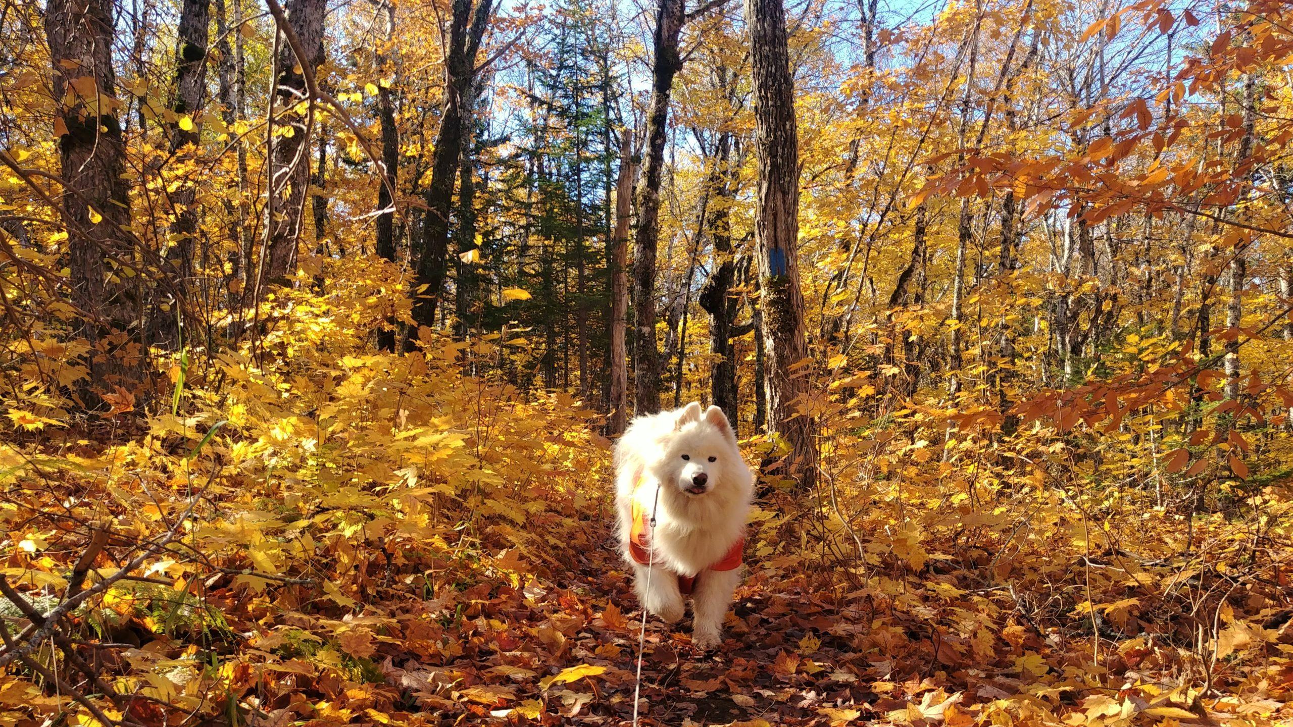 Randonnées automne Nouveau-Brunswick chasse quels vetements porter
