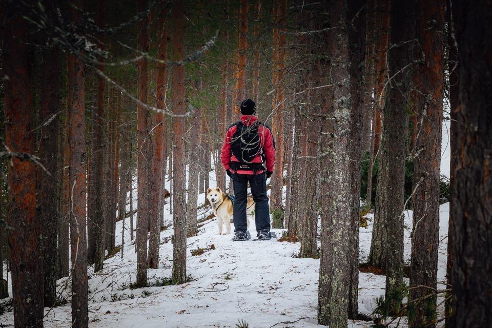 Cani-rando activité originale hiver