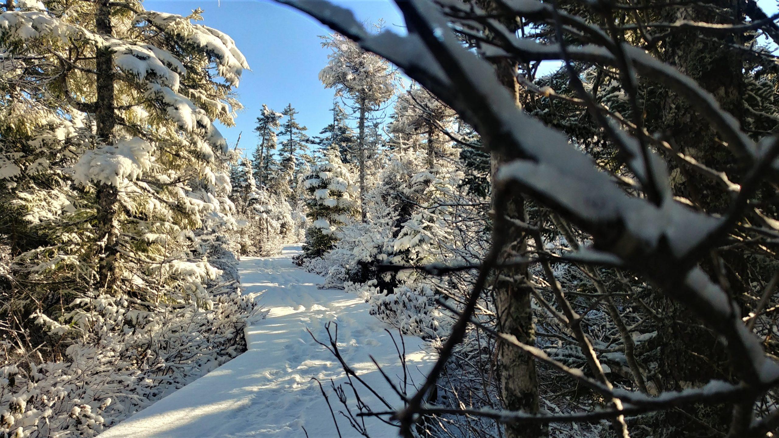 Parc national Fundy hiver randonnée pédestre Nouveau-Brunswick Arpenter le chemin