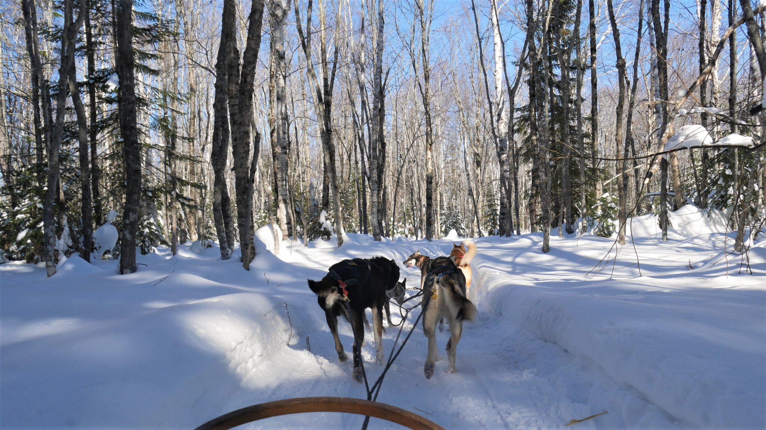 Région Chaleur Aventures Birch Bark Adventures chiens traîneau Nouveau-Brunswick