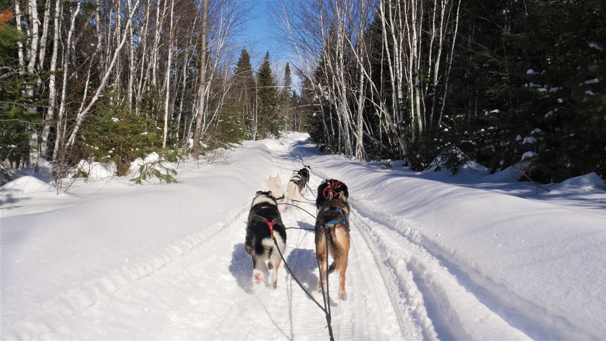 Région Chaleur Aventures Birch Bark Adventures traîneau chiens Nouveau-Brunswick