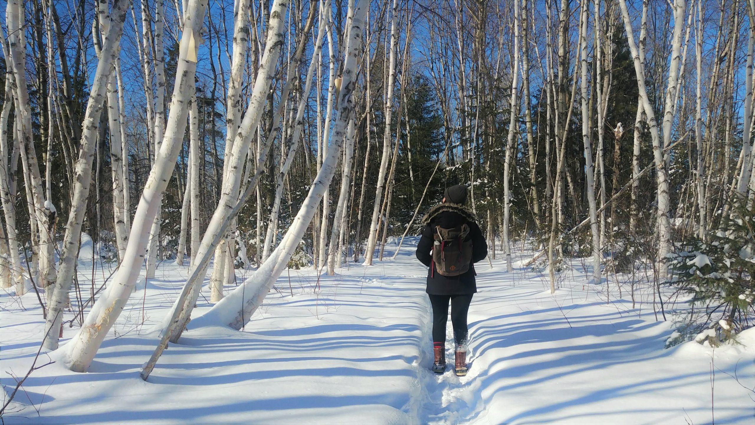 Région Chaleur Pointe Daly hiver Nouveau-Brunswick Canada