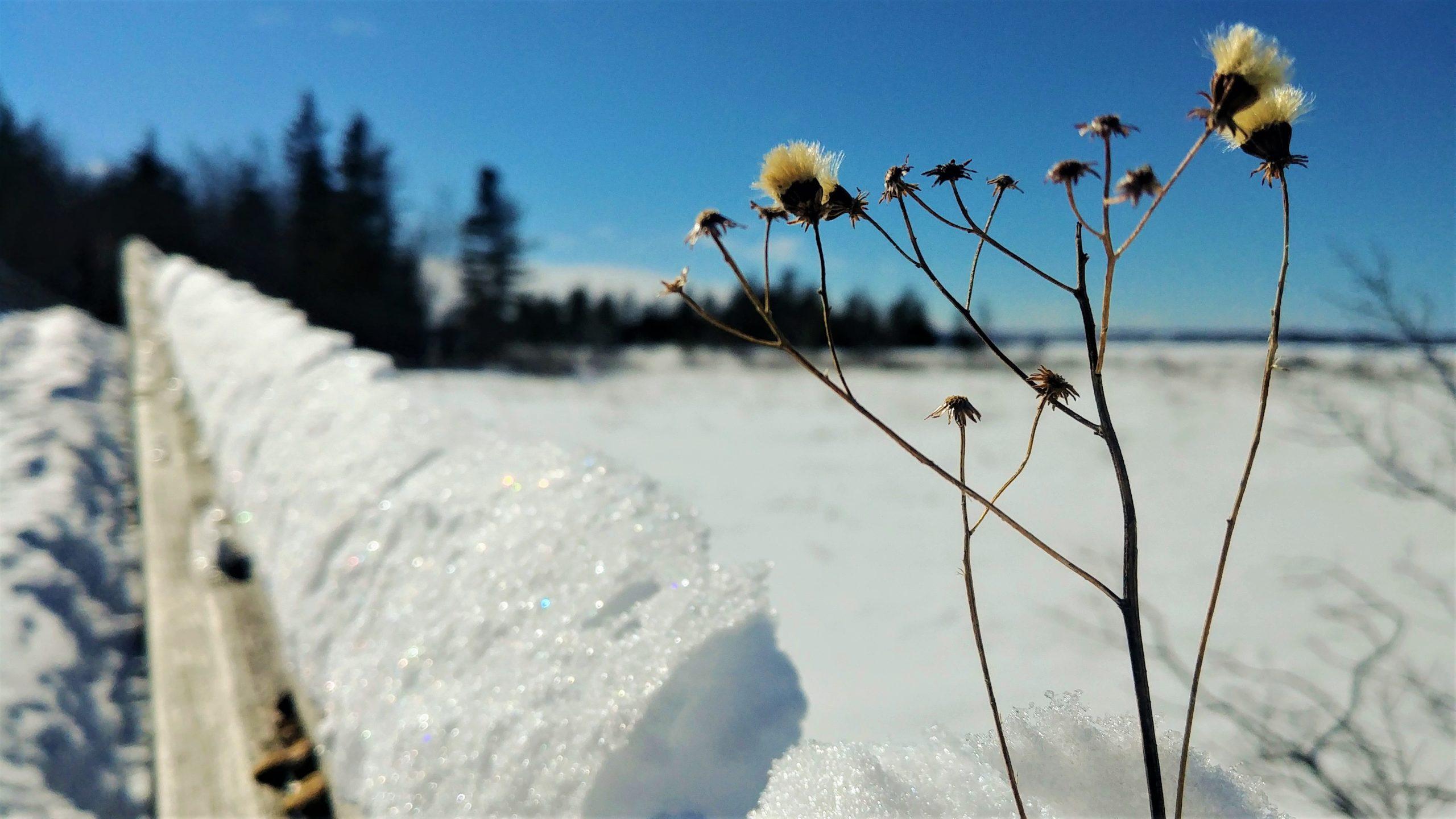 Région Chaleur Pointe Daly raquettes hiver Nouveau-Brunswick Canada