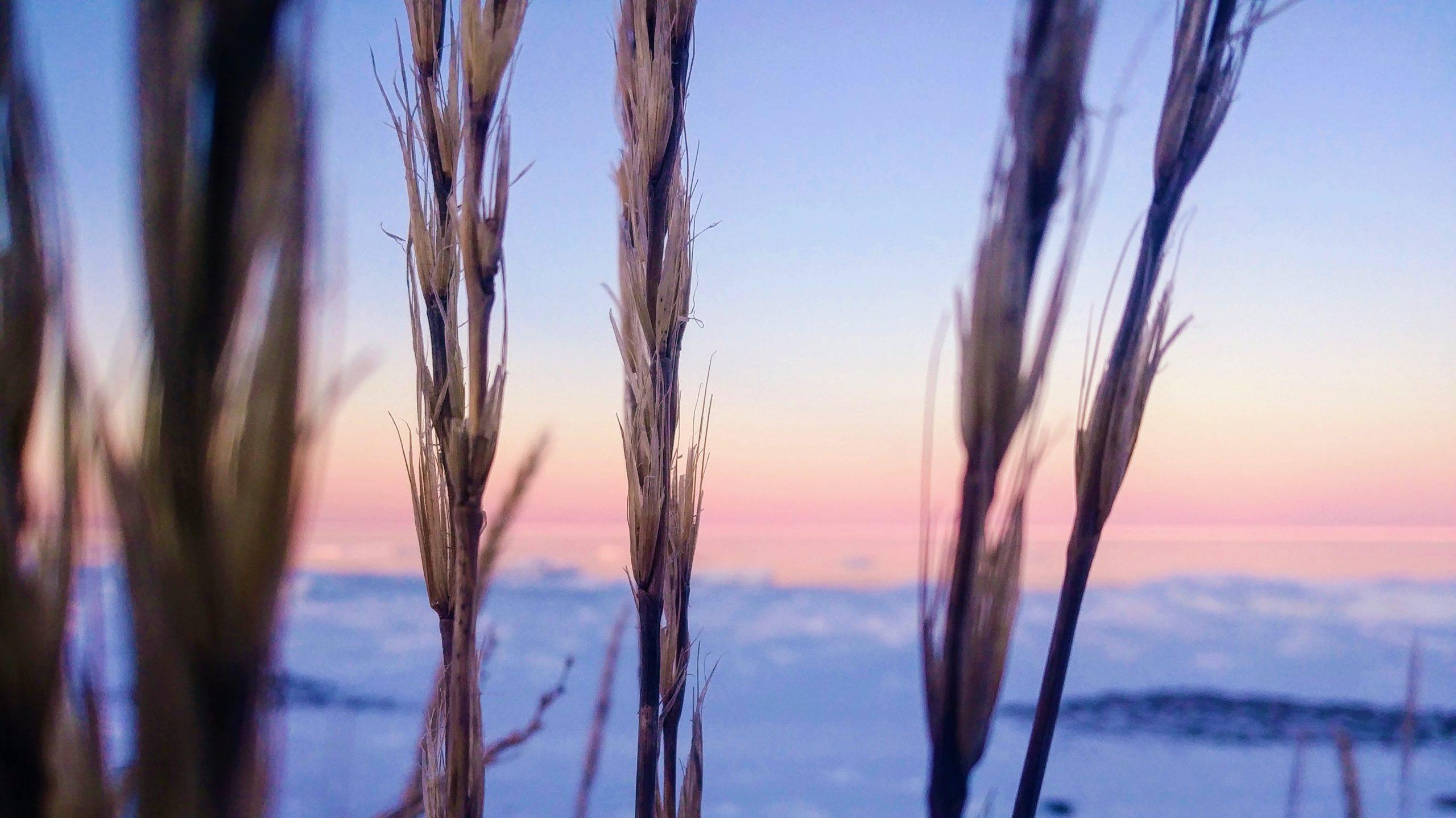 Région Chaleur coucher de soleil Beresford