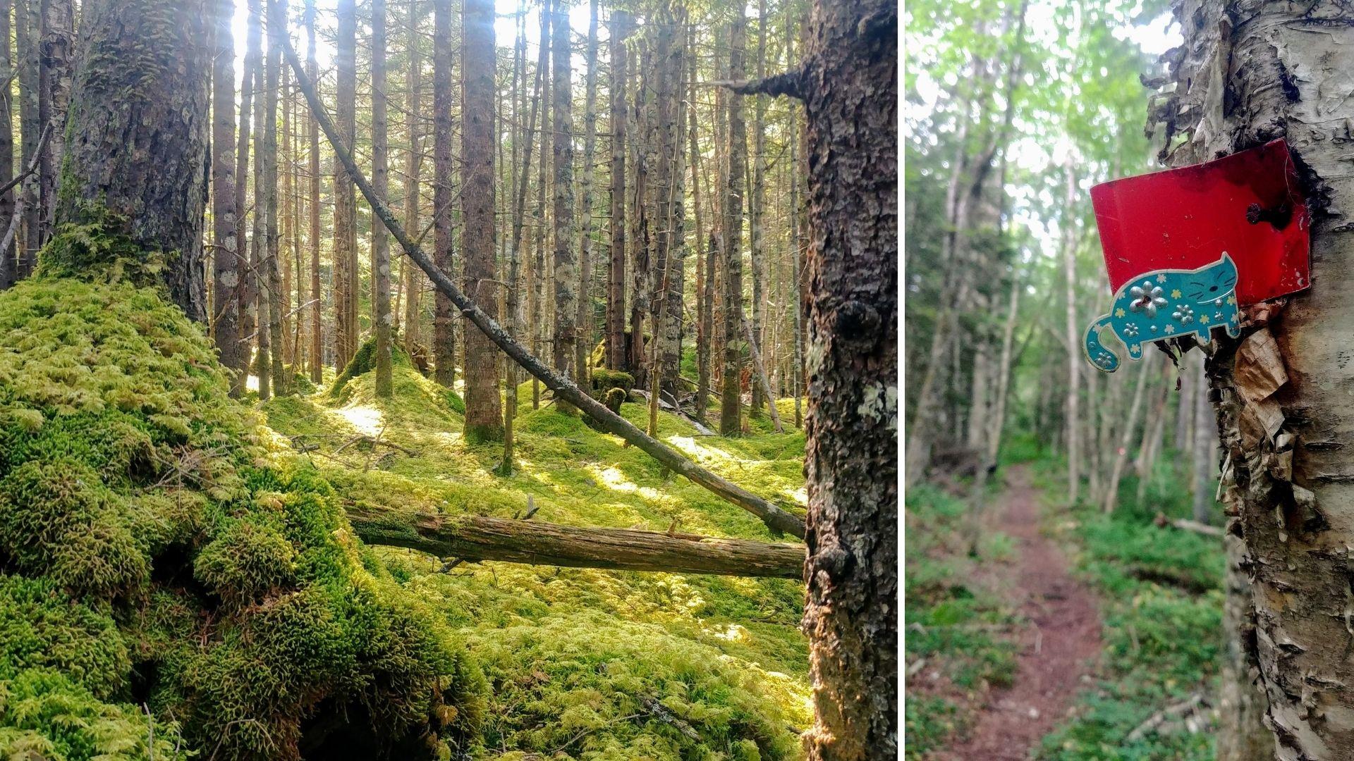 Randonnée solo parc provincial sentier Cape Chignecto Nouvelle-Écosse Canada - Eatonville