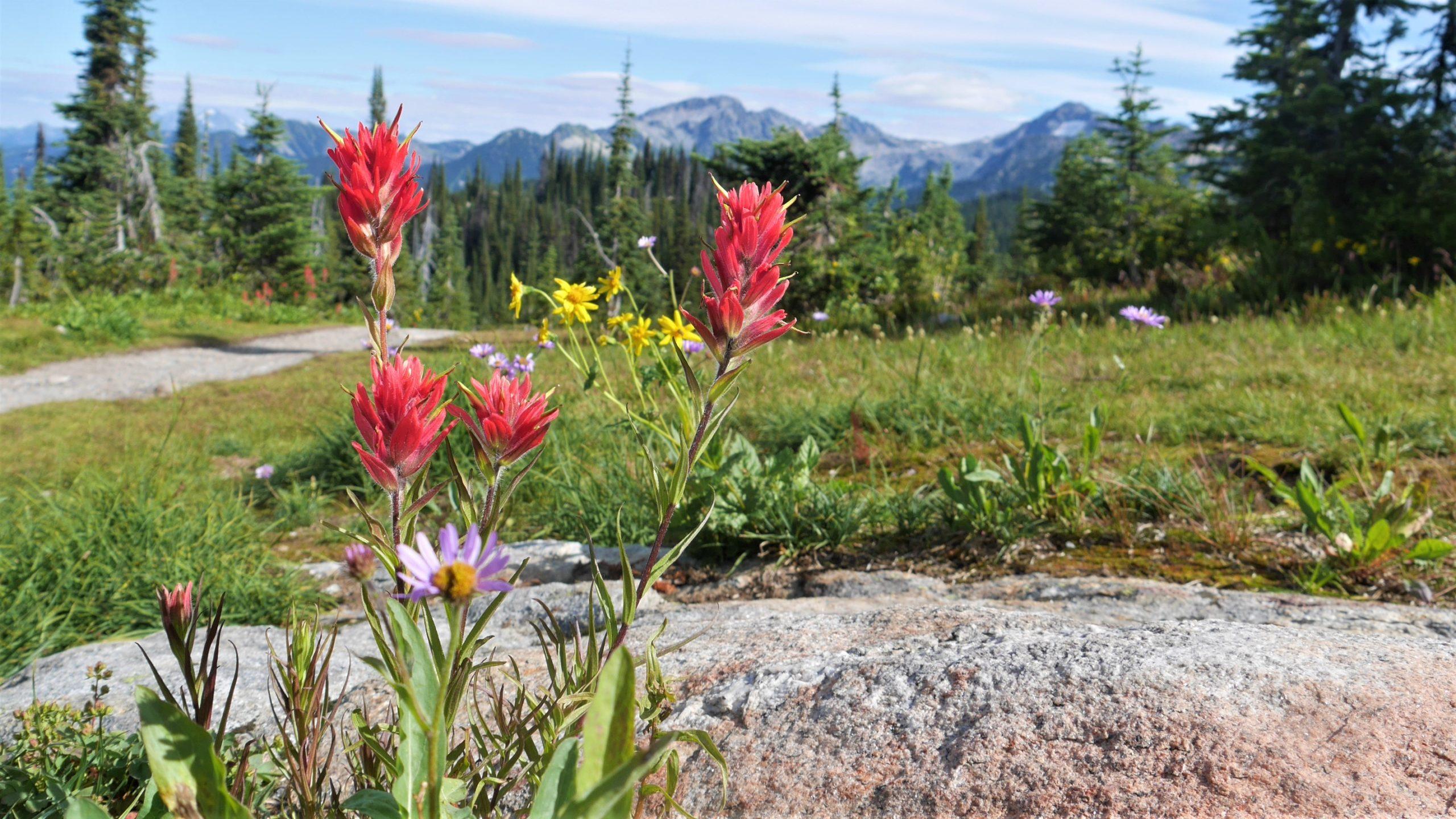 Prés-dans-le-ciel Parc national Mont Revelstoke canada