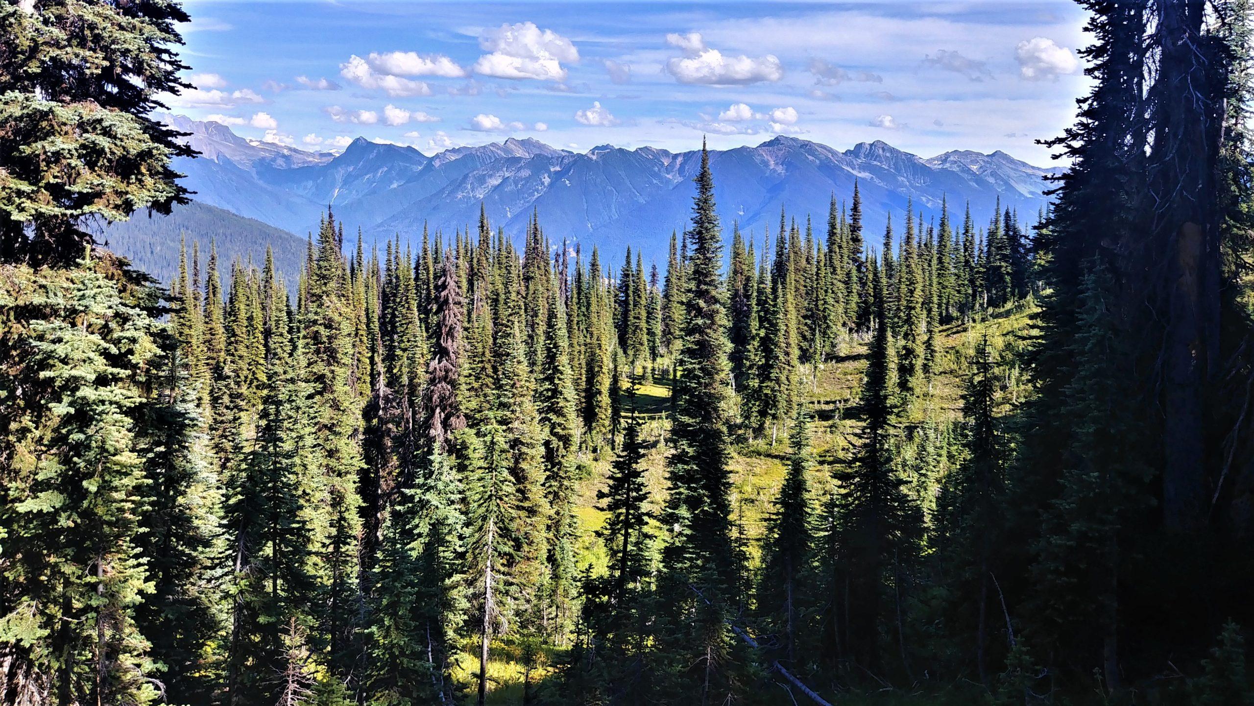 Promenade des prés-dans-le-ciel Mont-Revelstoke Canada roadtrip