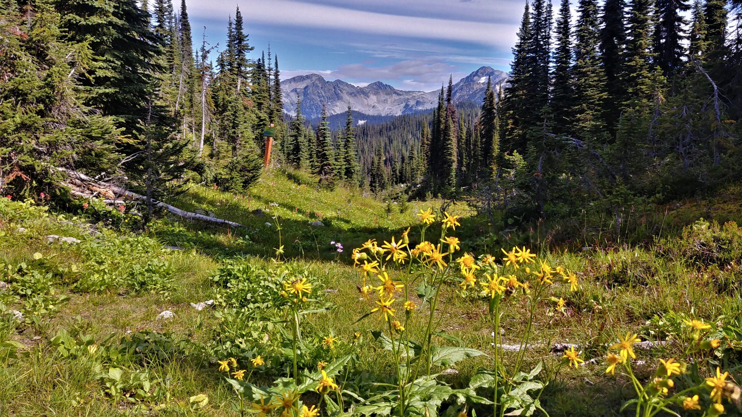 Sentier du lac Eva, parc national du Mont-Revelstoke Canada